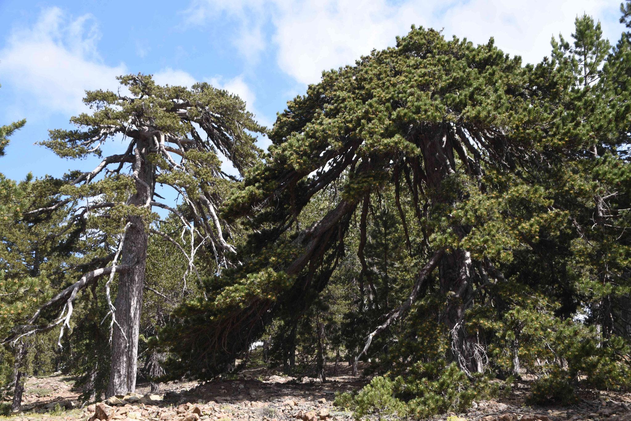 Imposante Bäume findet man immer wieder