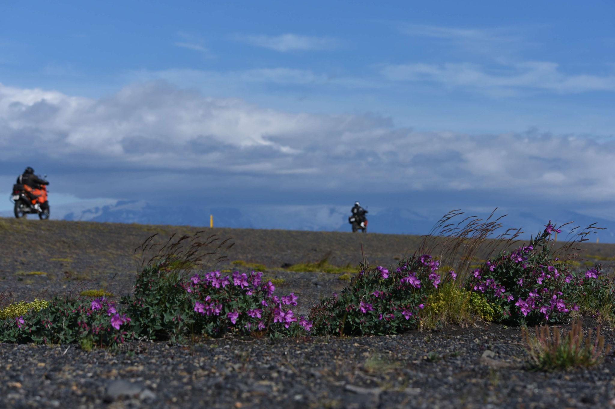 An der Ringstraße östlich Kirkjubaejarkalustur III