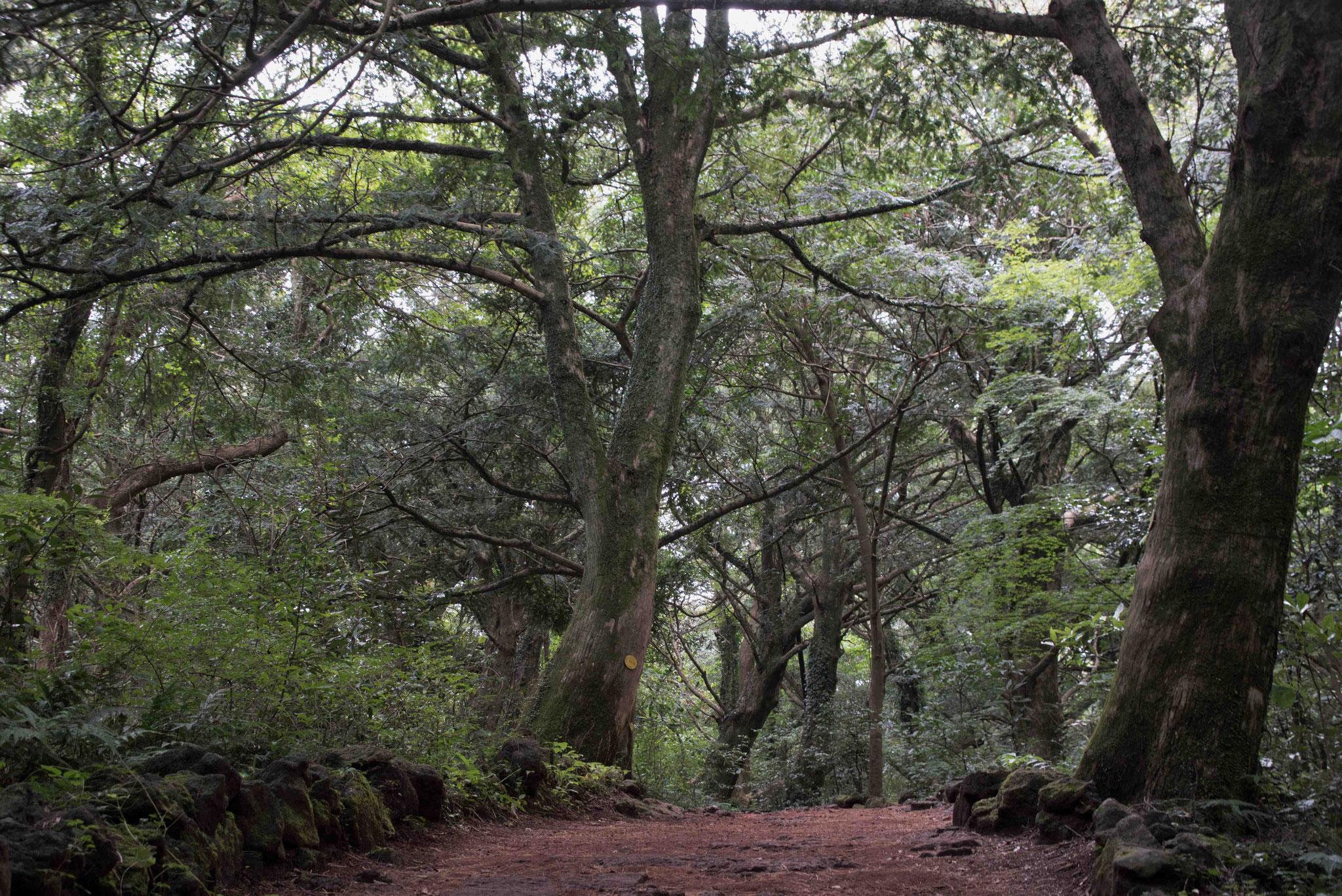 Schöner Spazierweg im Muskatnusswald