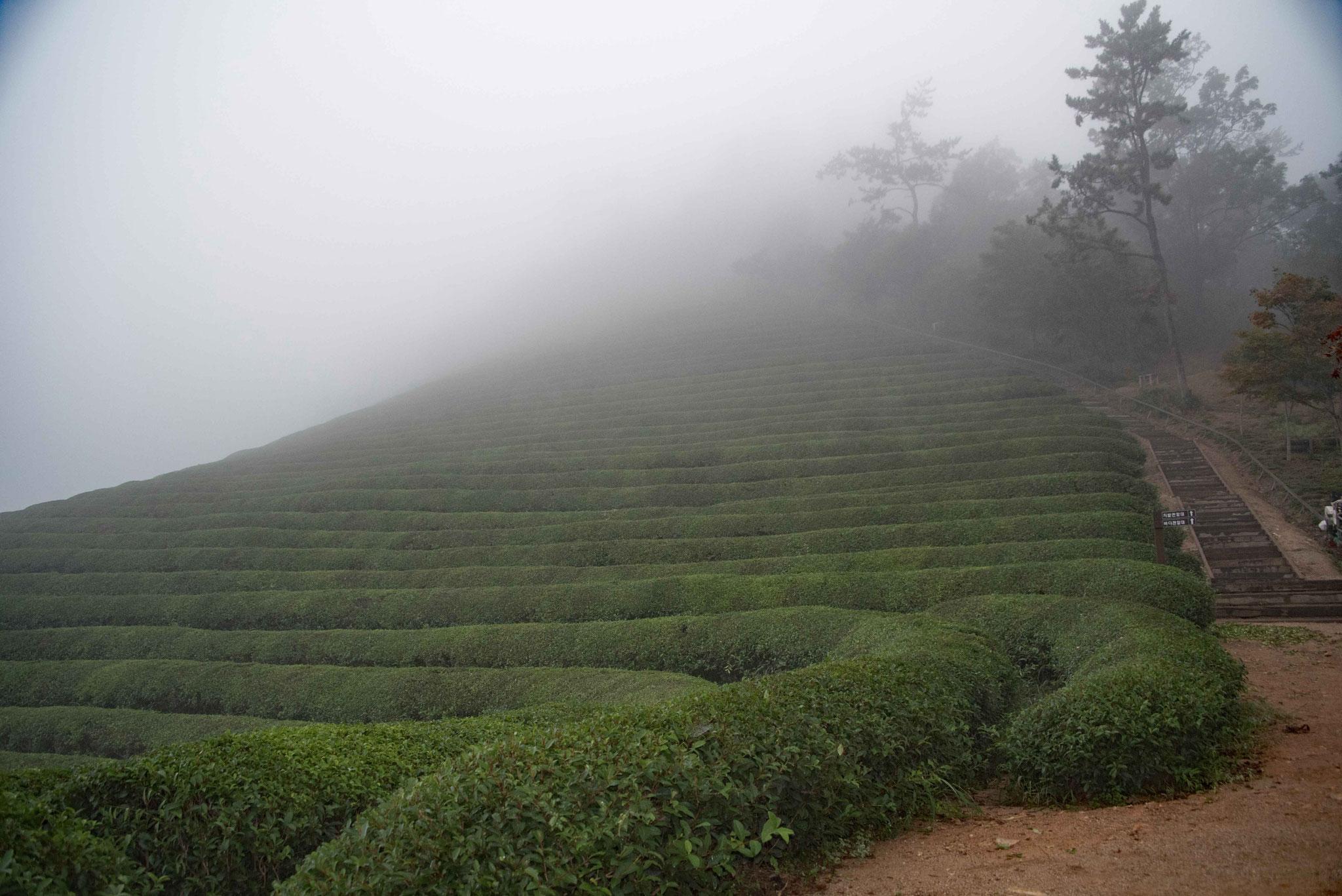 Der Nebel und Regen will leider nicht abziehen