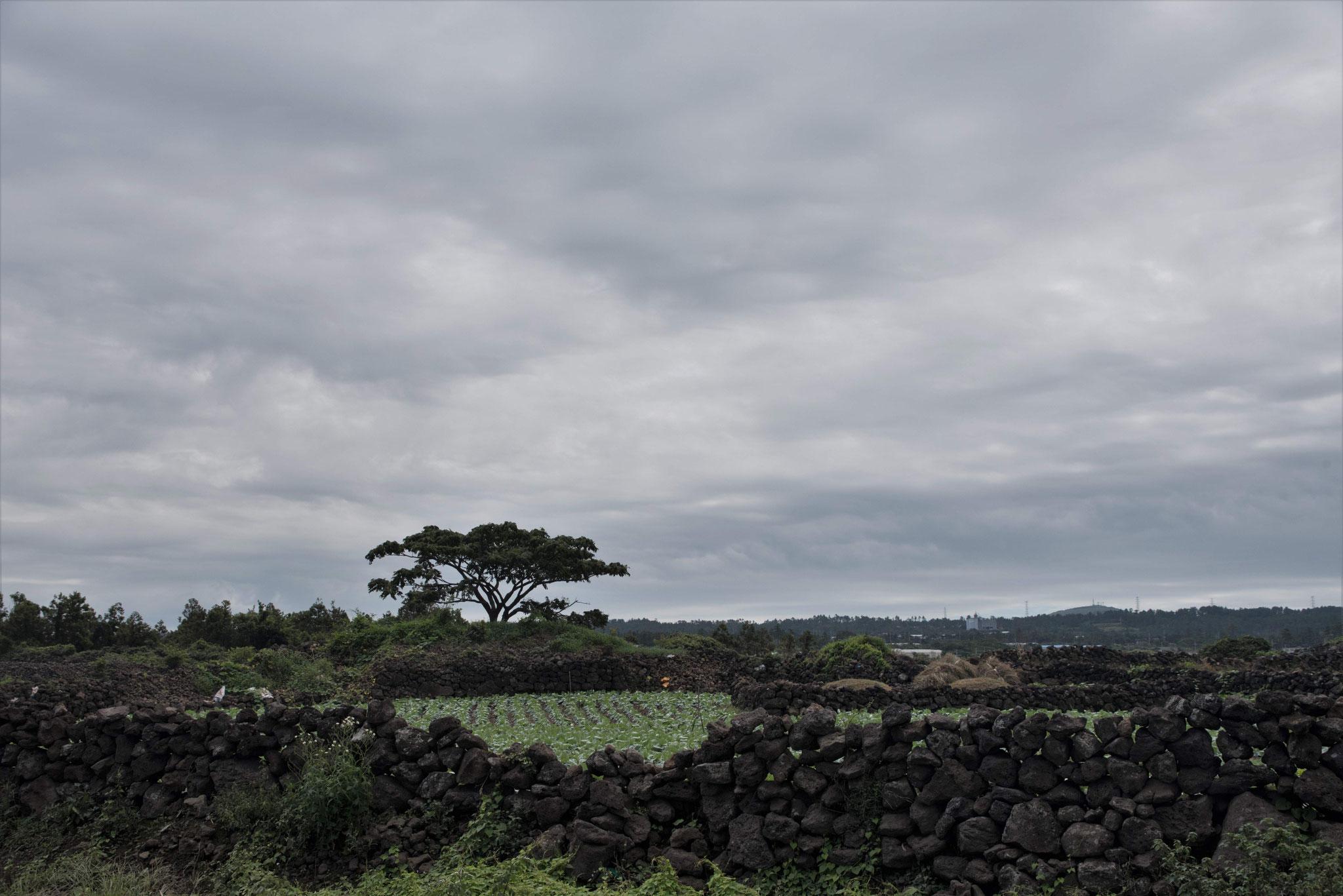 Erinnerungen an Pico (Azoren) werden geweckt
