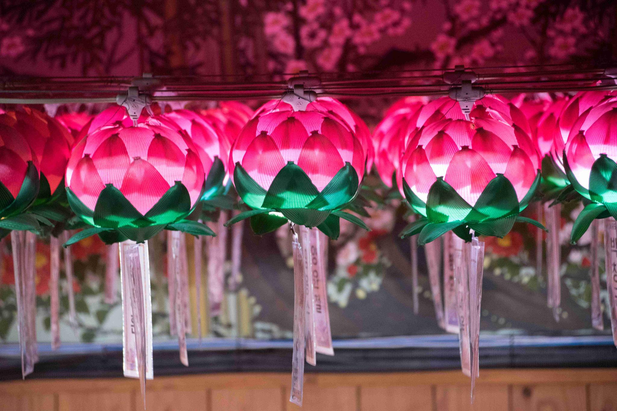 Lotusblüten mit Wunschzetteln