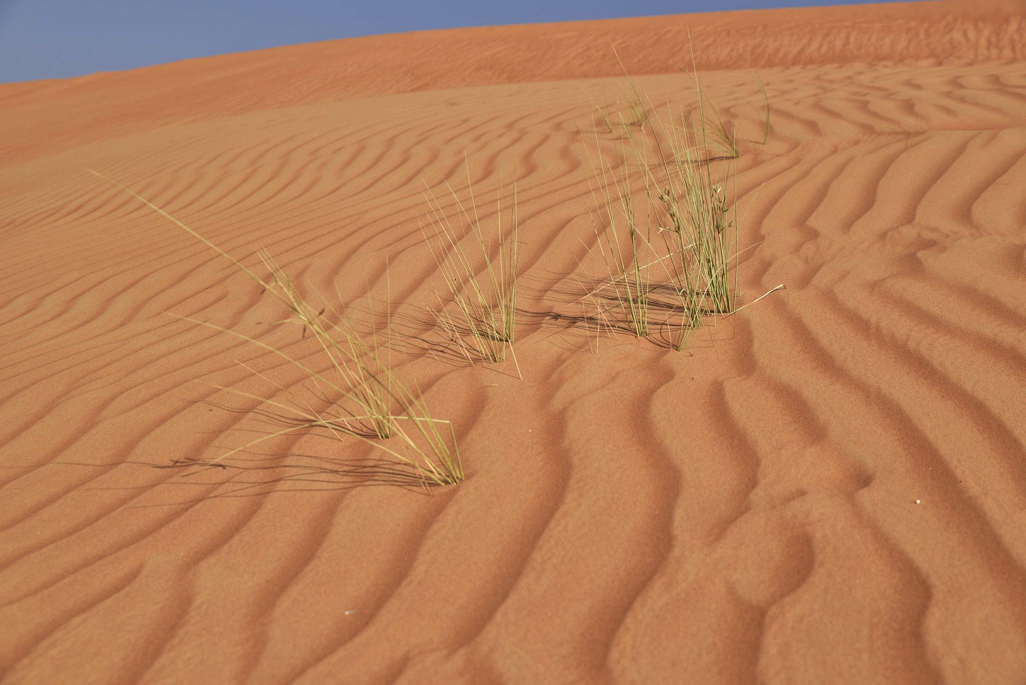 Grün in der Wüste II