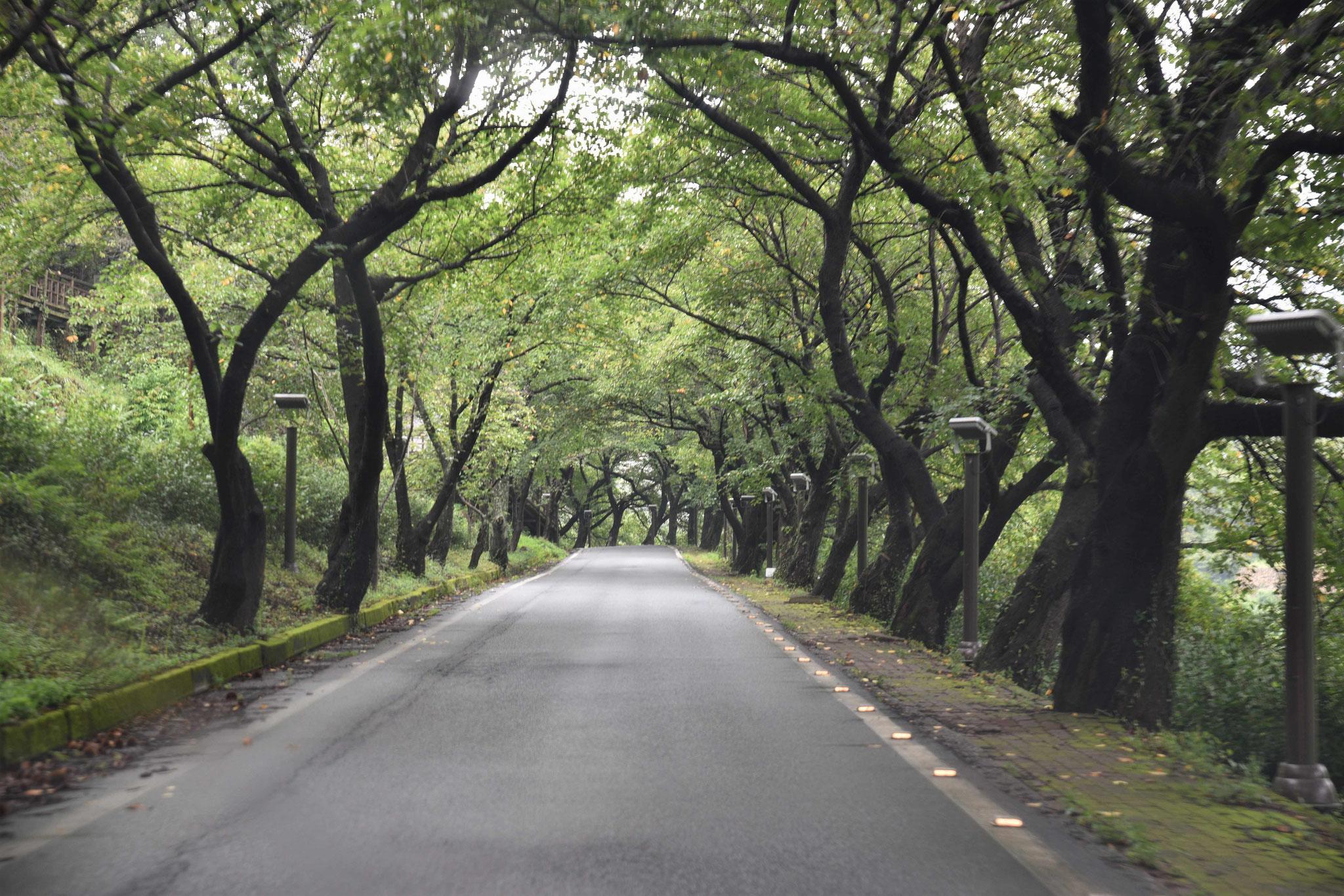 Scienic Drive II