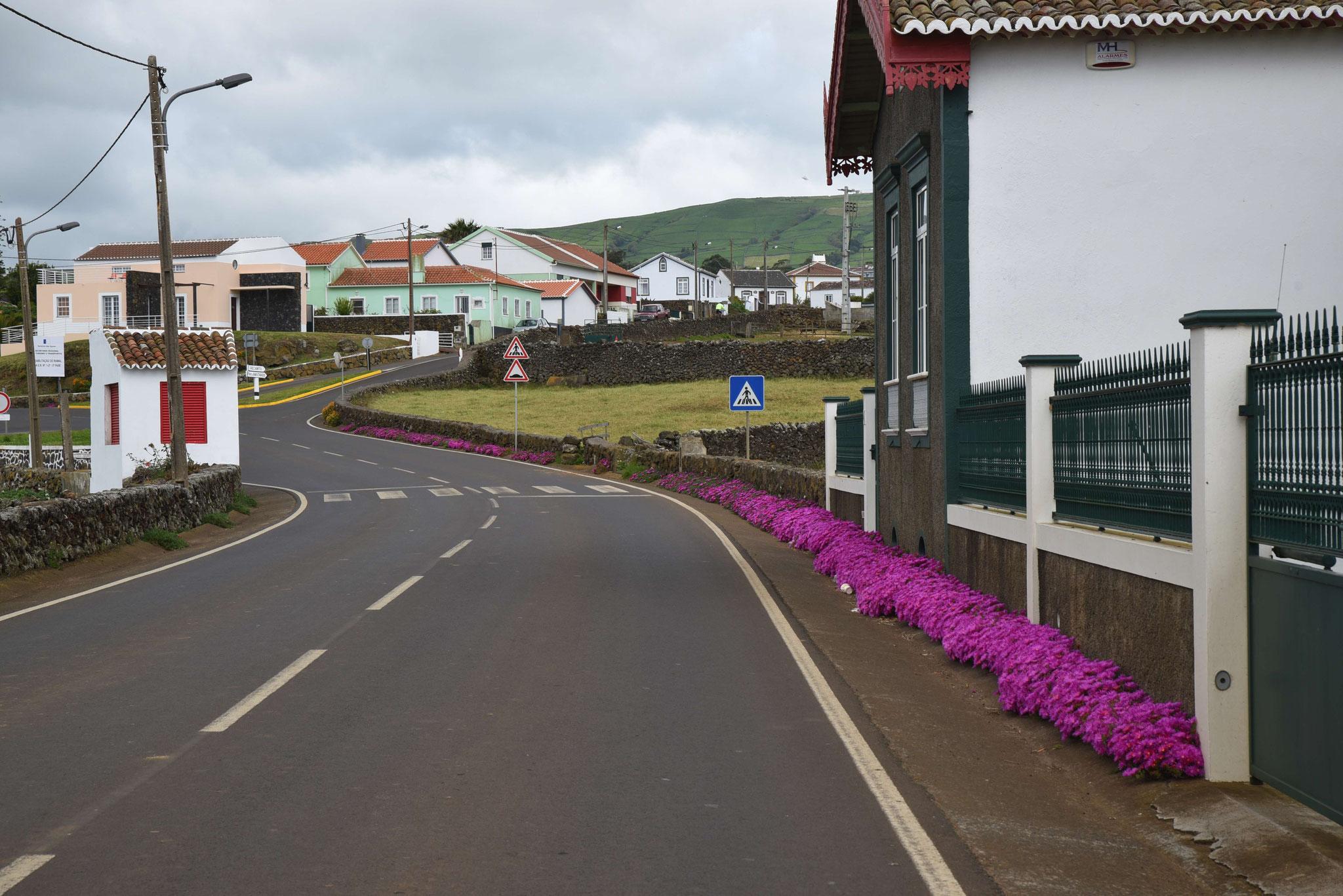 Schöne Straßenrandbepflanzung