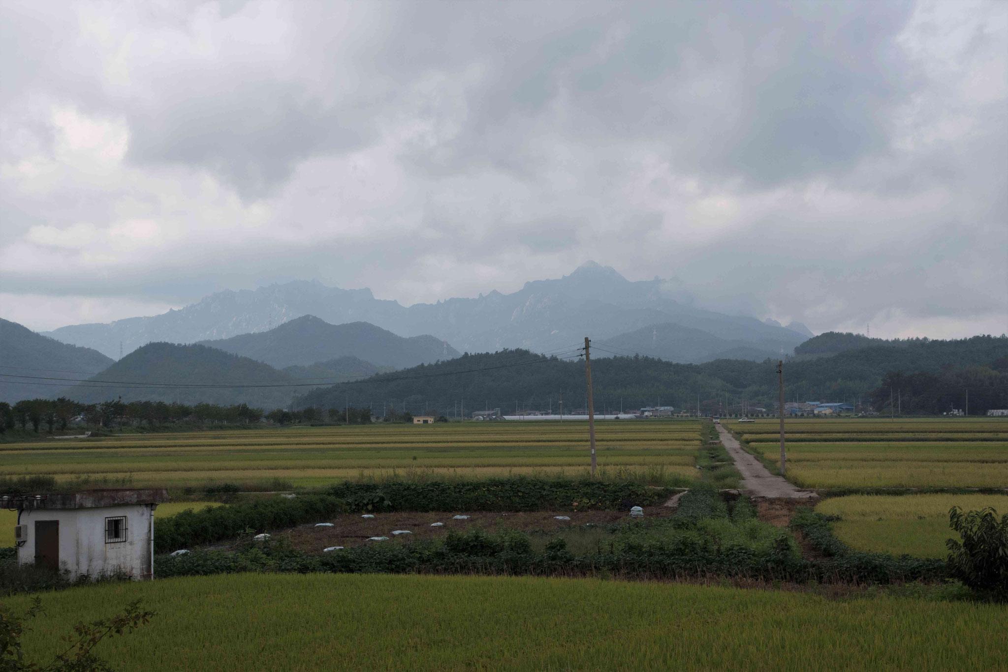 Reisfelder vor den Bergen im Südwesten vor Mokpo