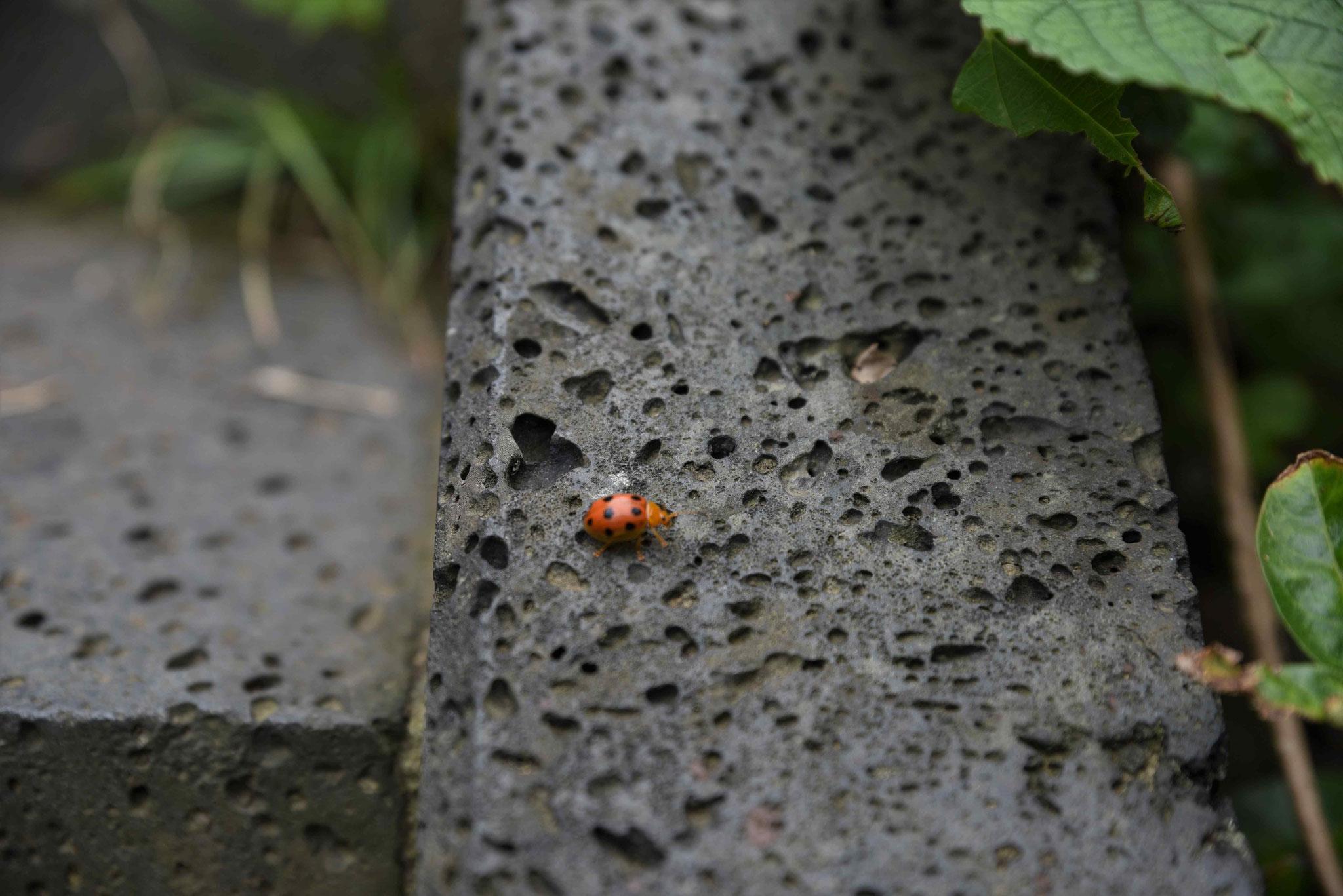 Käfer I