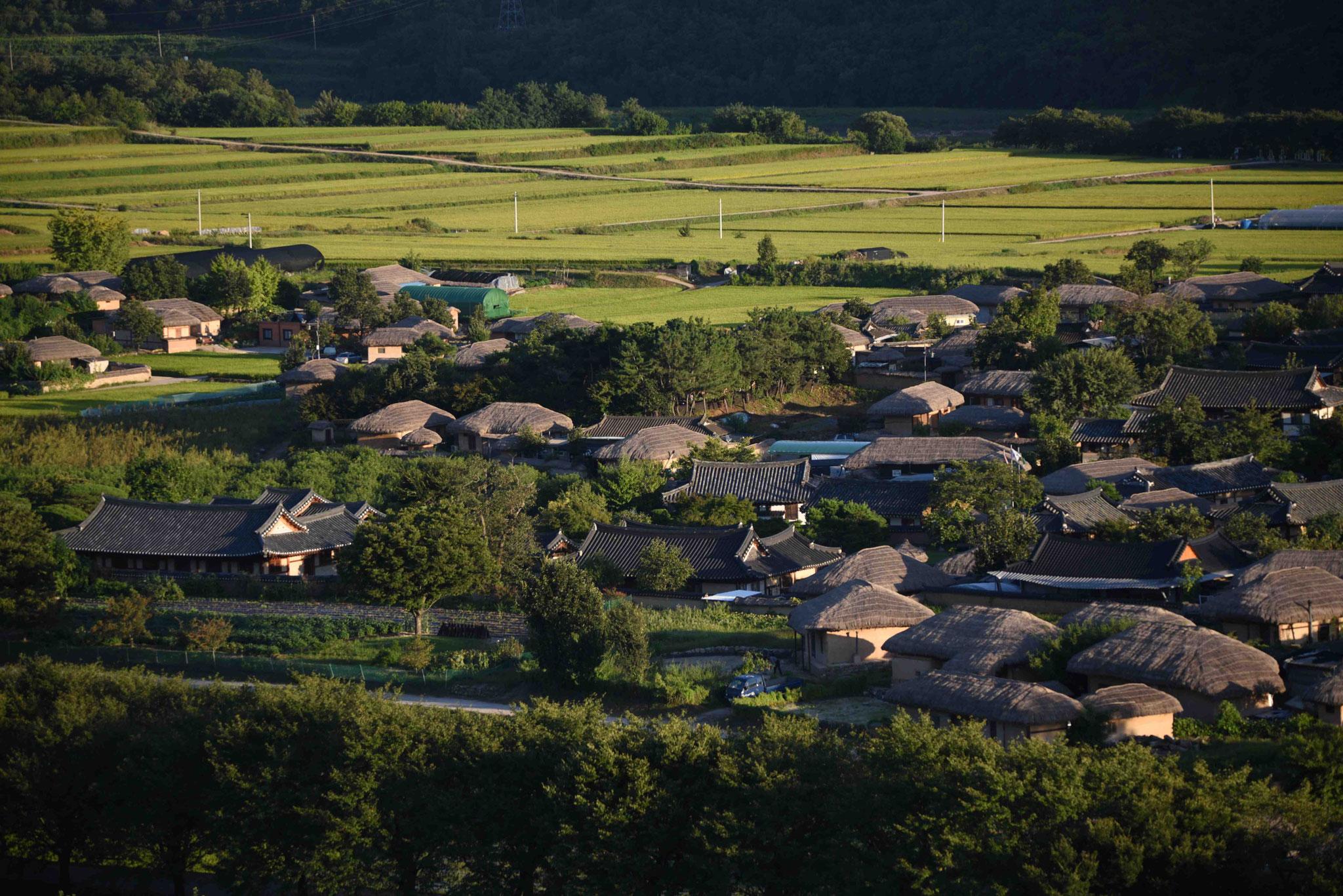 Das Licht beleuchtet die Reisfelder im Hintergrund