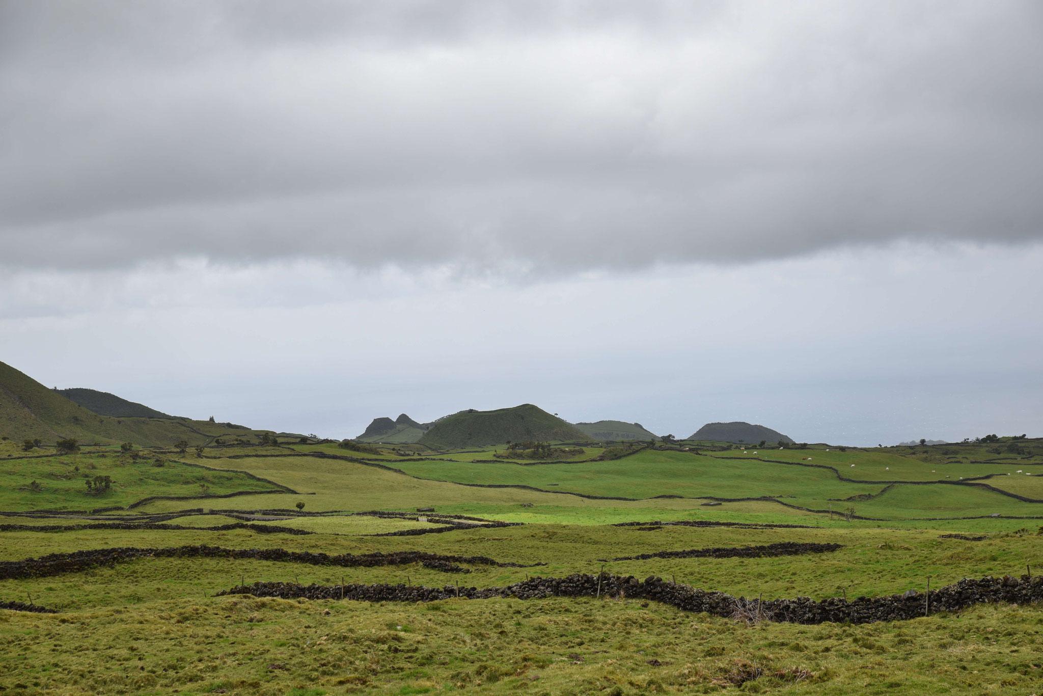 Landwirtschaft - die Einnahmequelle schlechthin auf den Azoren neben Fischfang und Tourismus
