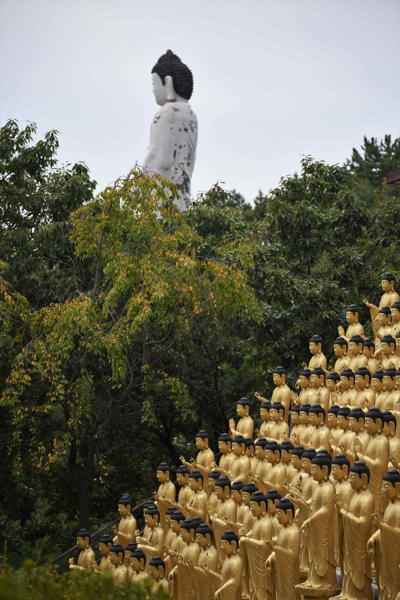 Im Hintergrund gigantische Statue eines Buddas