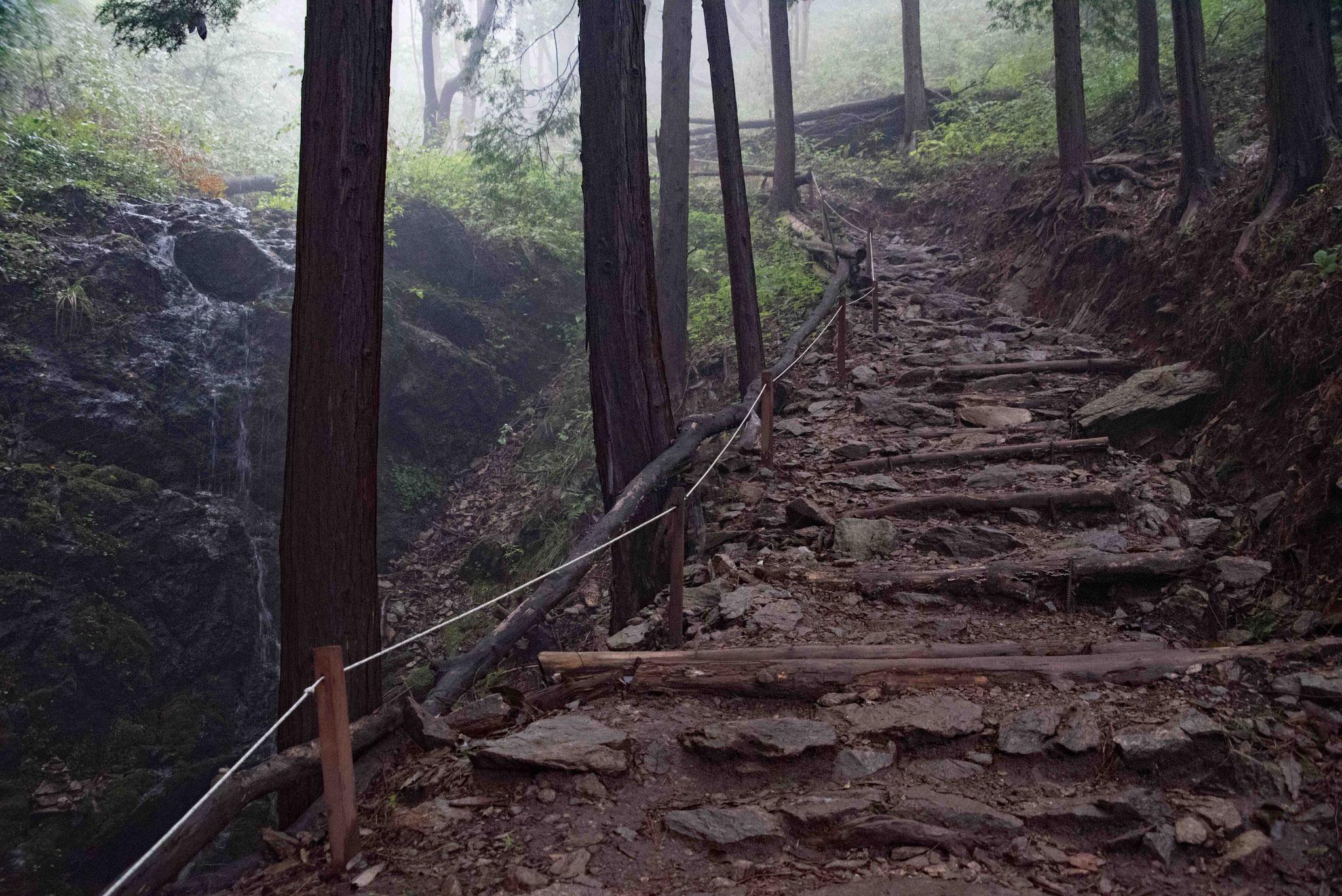 Im Wald  oberhalb der Teeplantage