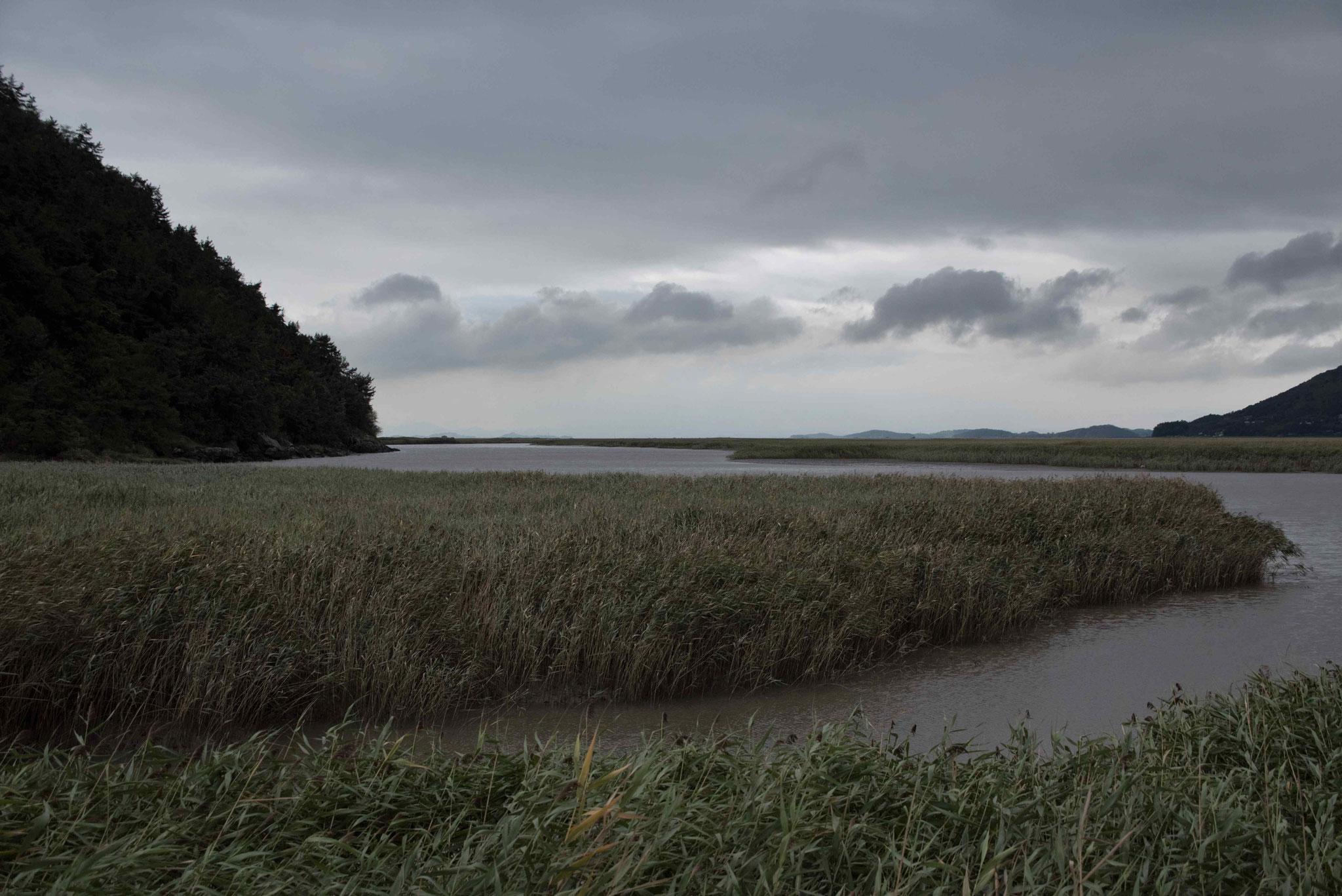 Watt - Heimat für Krabben, Schlammspringer, Kraniche