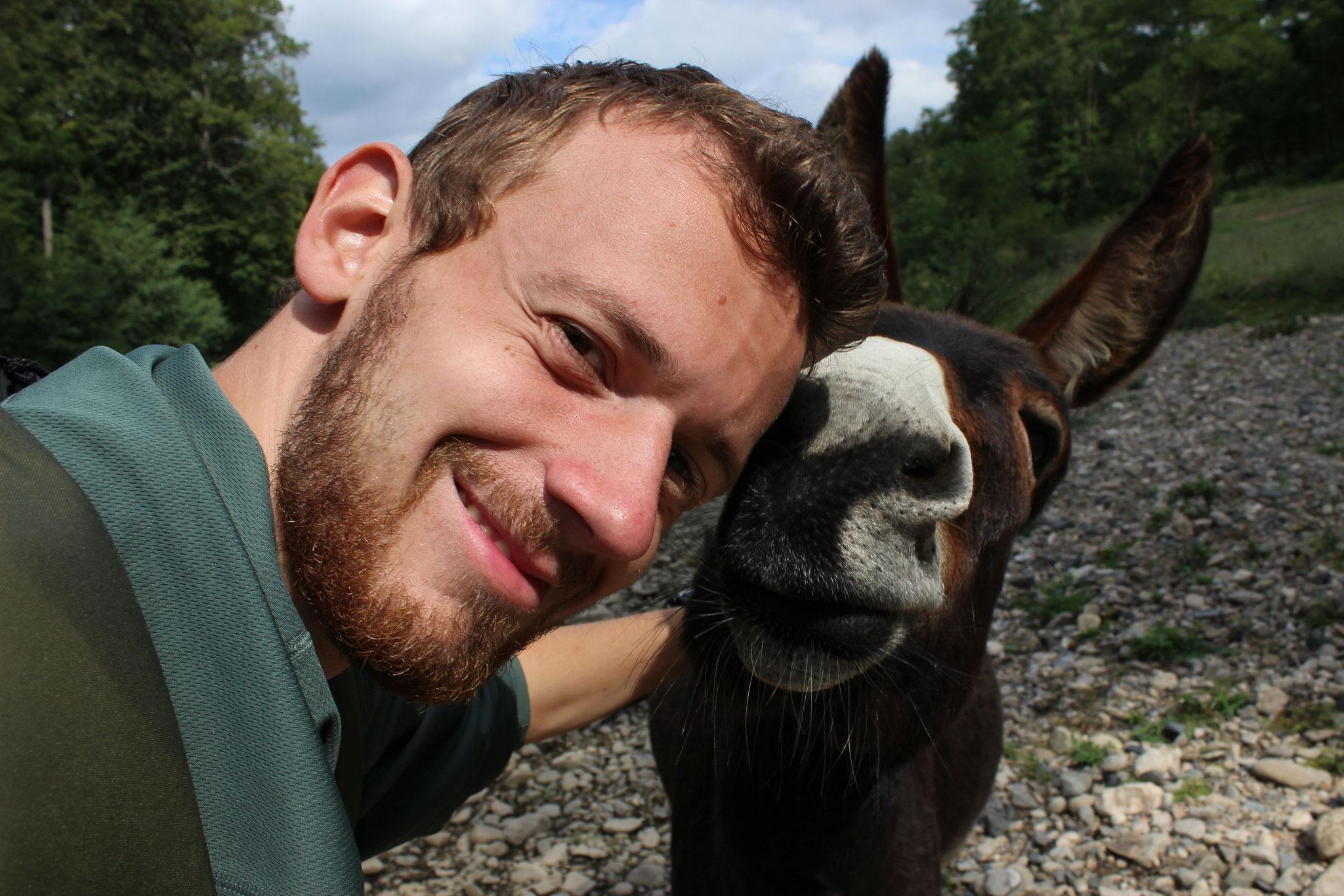 Zwei Esel am Allier