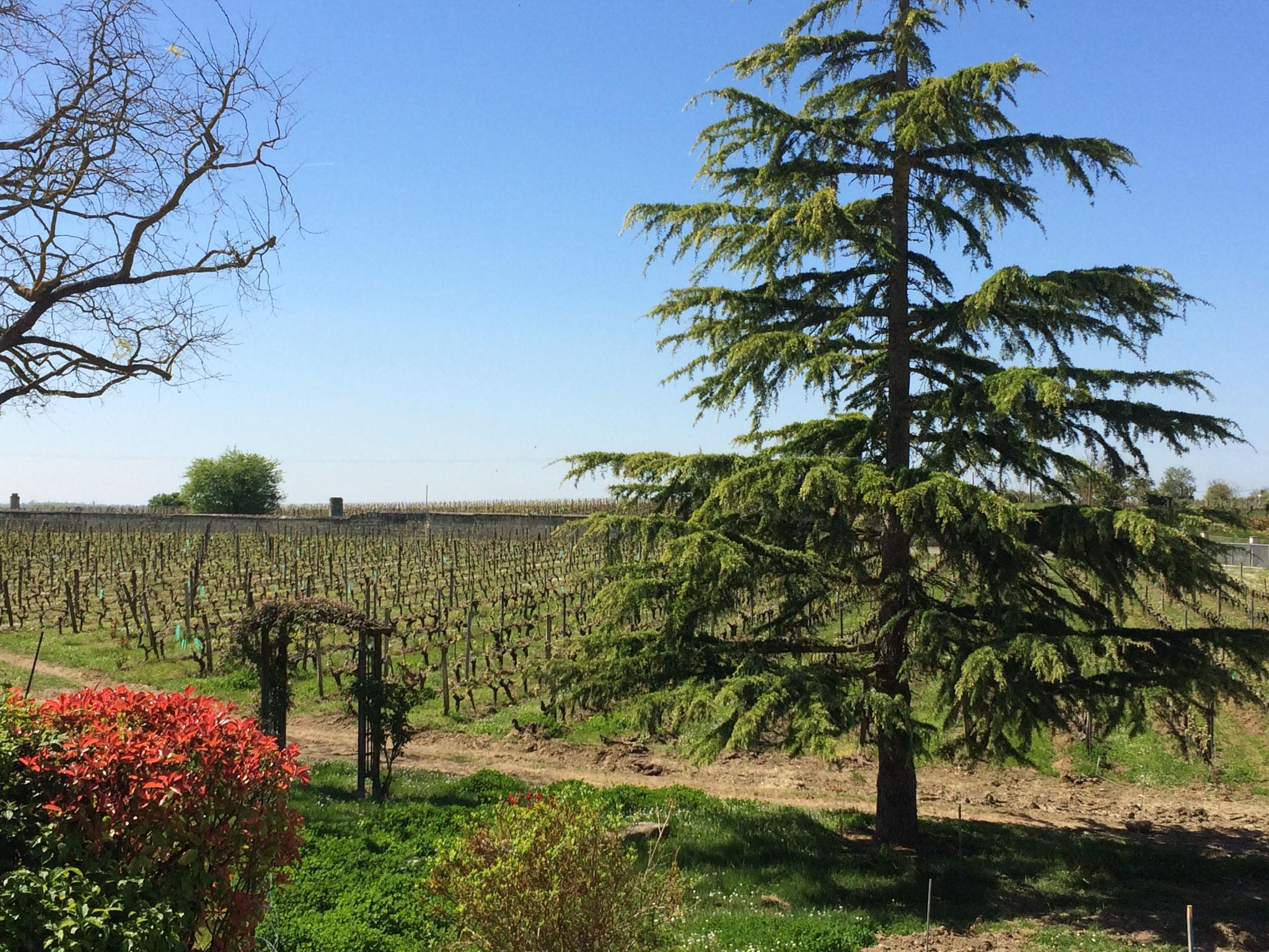 Gîte des Nerleux, St. Cyr en Bourg, Vue vignes