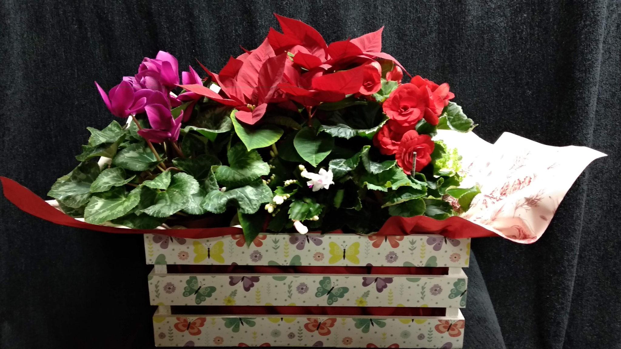 Cesta de madera con begonia, cyclamen, flor de pascua  y cactus de navidad