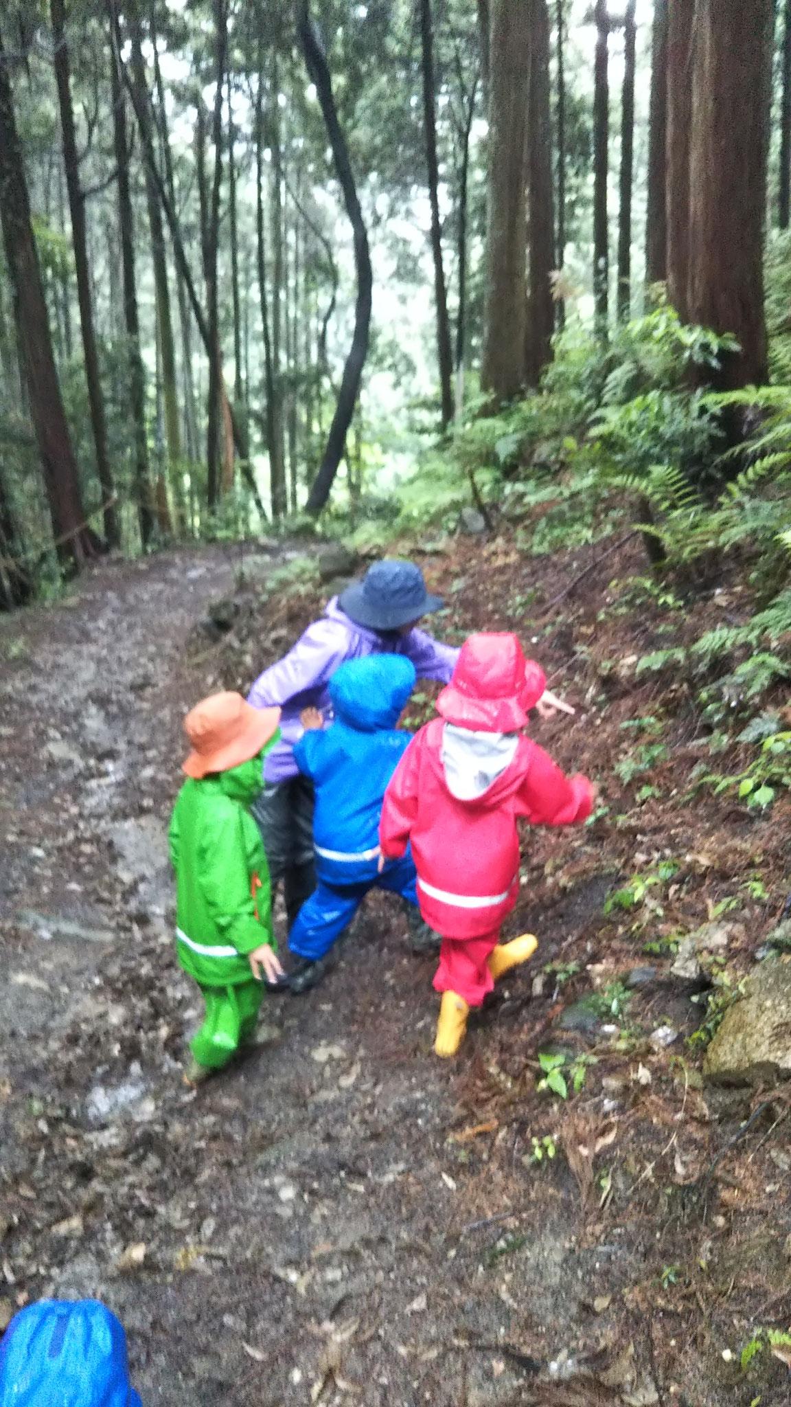 雨の日の森散歩