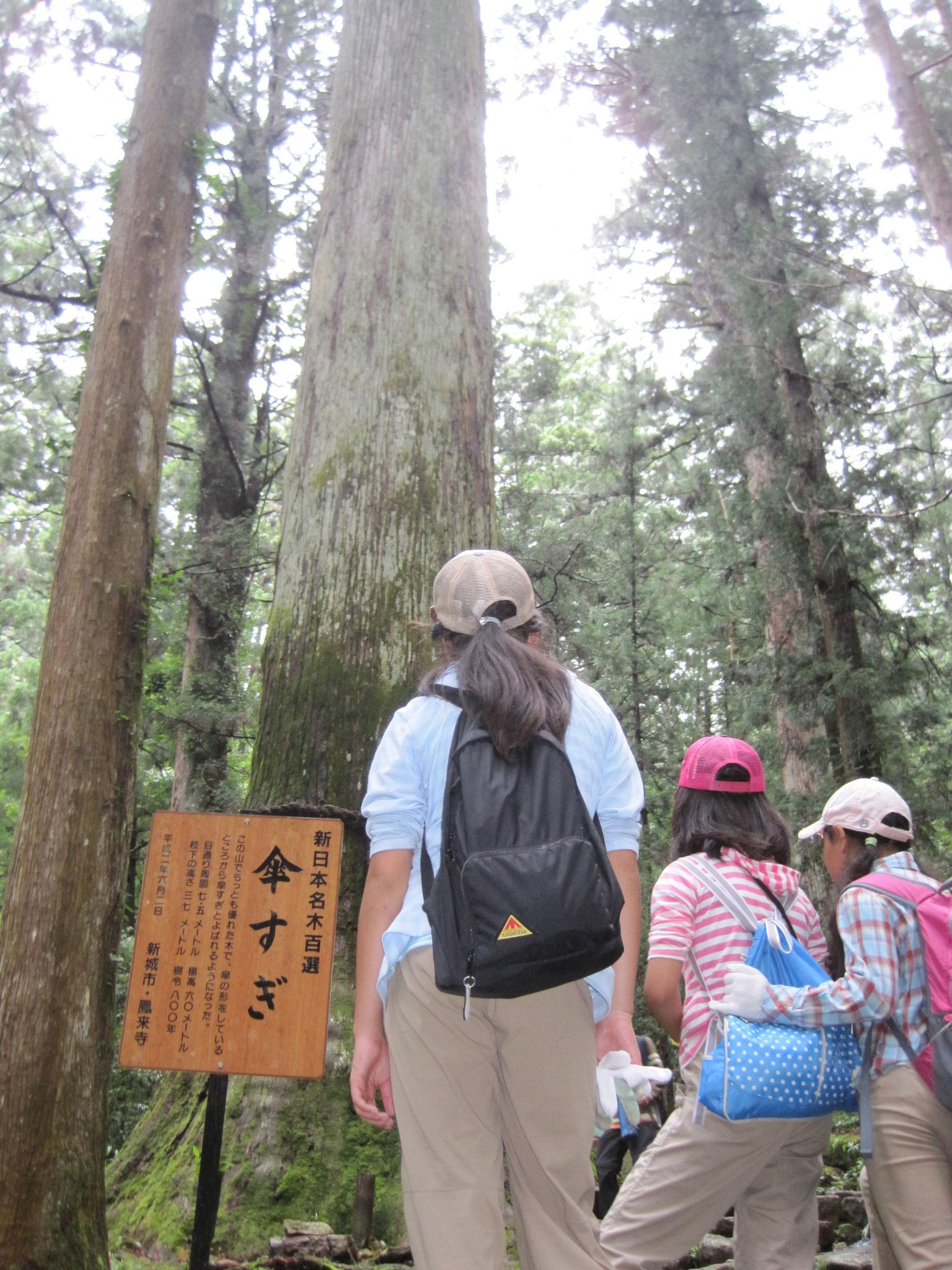翌日は鳳来寺山の中腹まで探検。