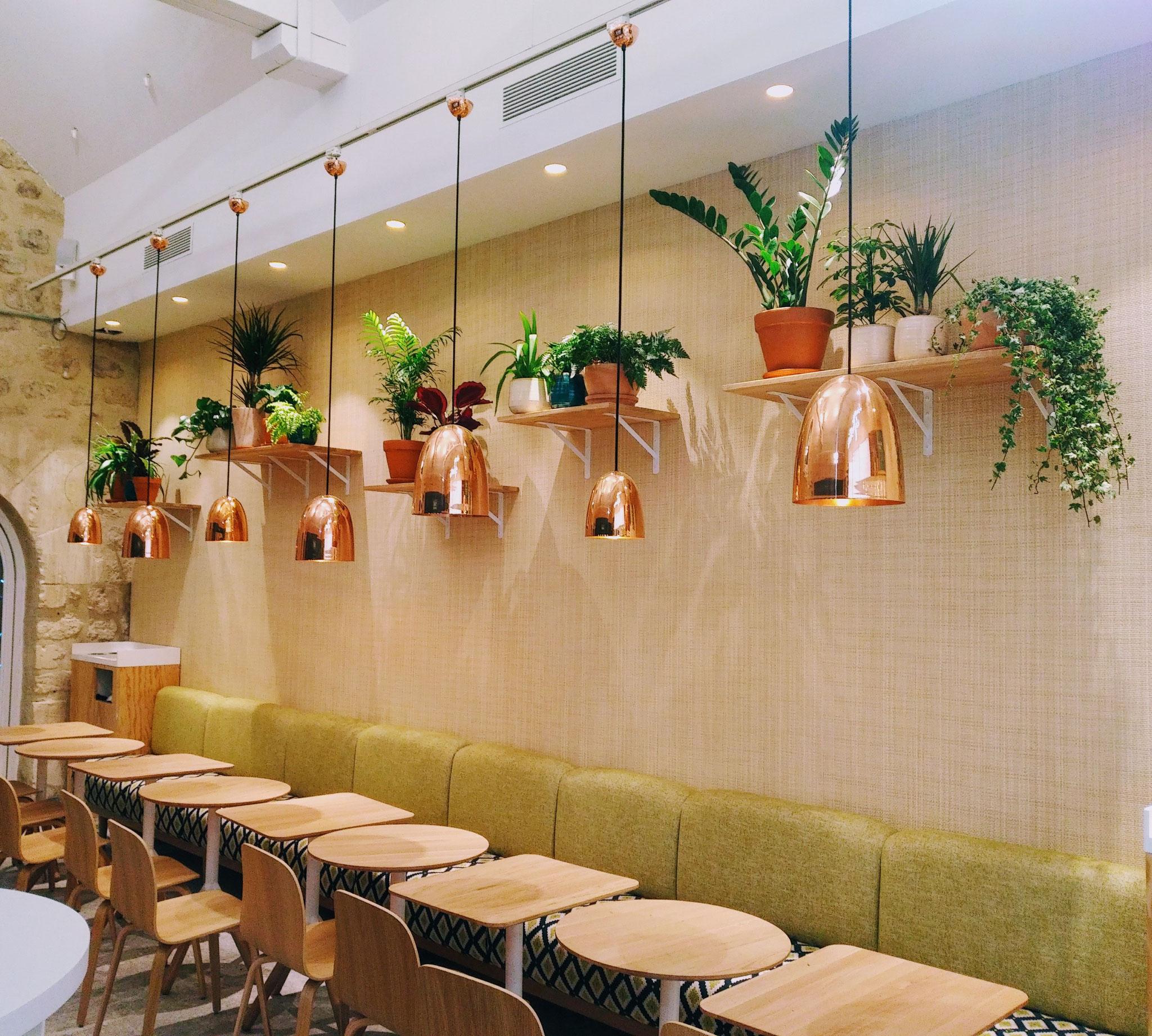 Paysagiste d'intérieur: entretien de plantes d'intérieur en entreprise (ici un restaurant de Paris Bercy)