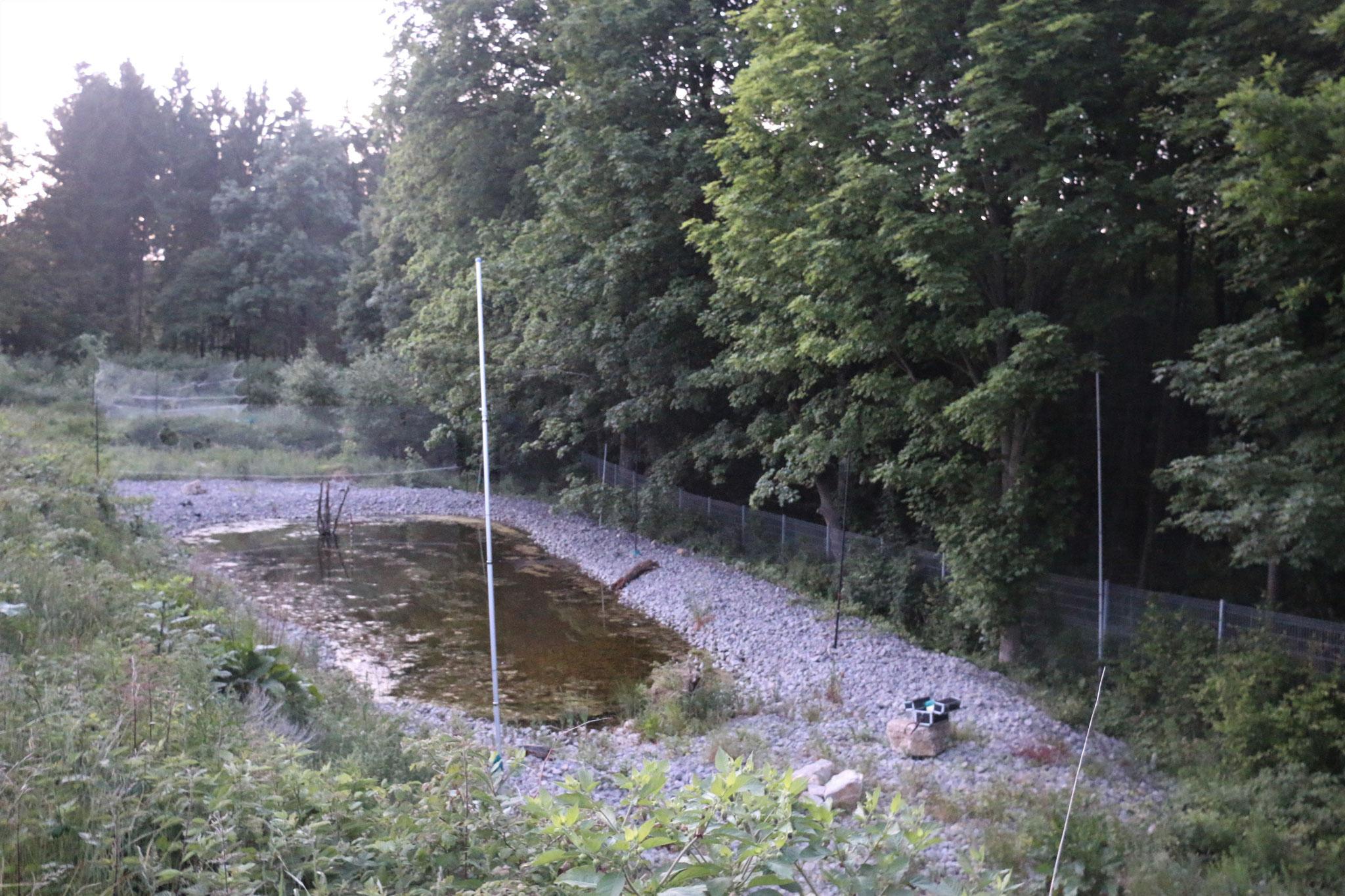 Netzfang an einem Teich