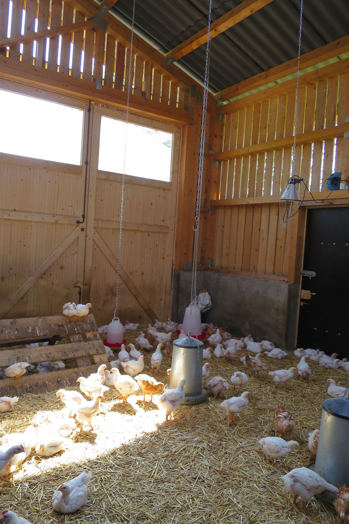Mai - Im neuen Stall ist viel Platz für die Hähnchen.