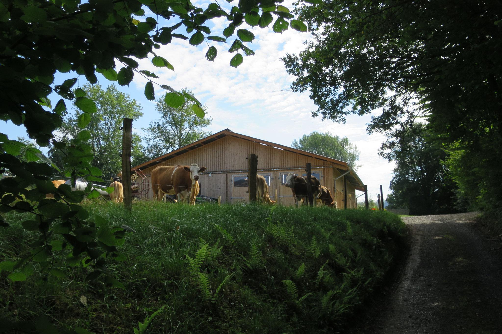 Juli - Blick auf den Stall.