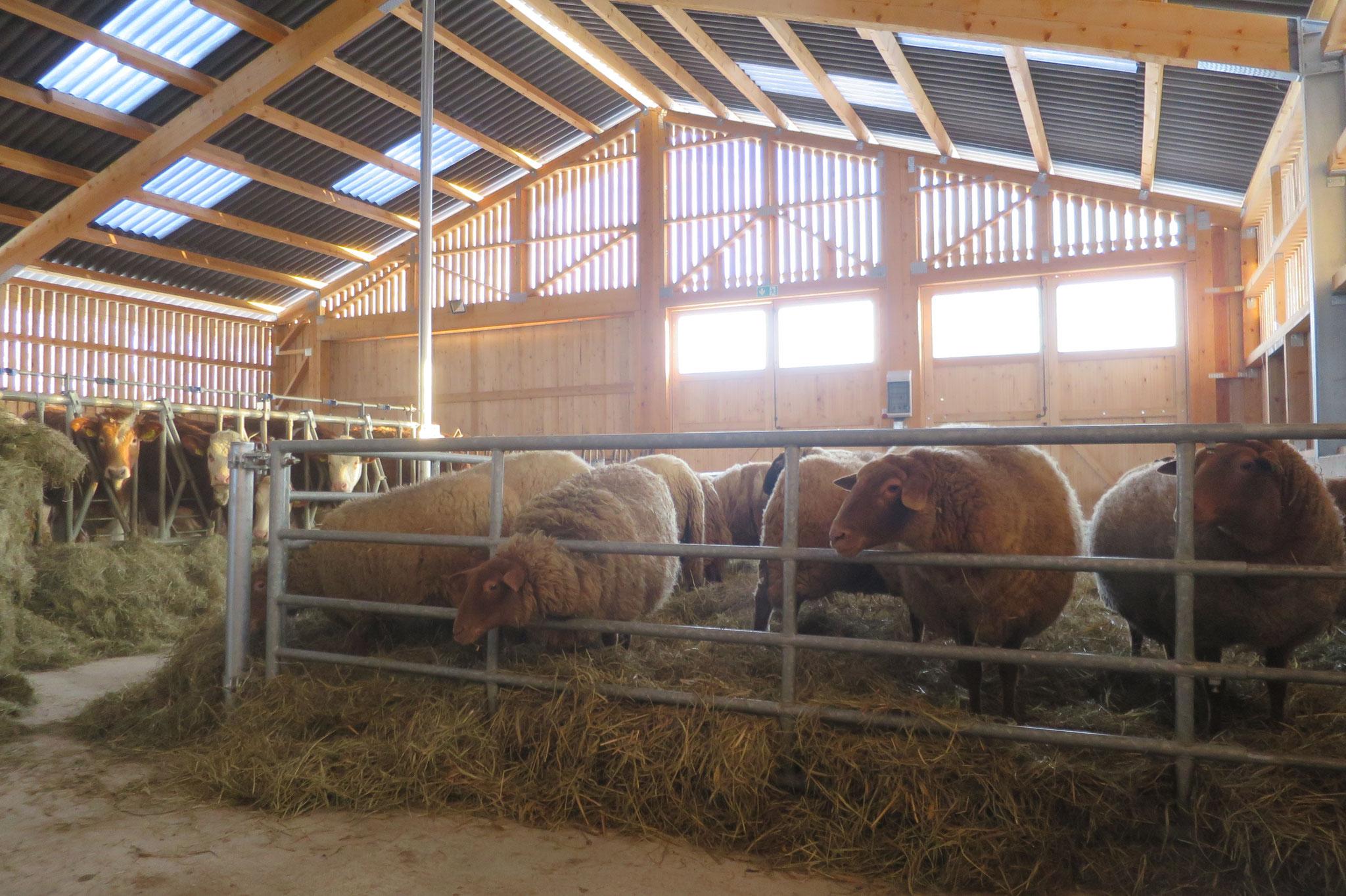Februar - Rinder und Mutterschafe sind im Stall.