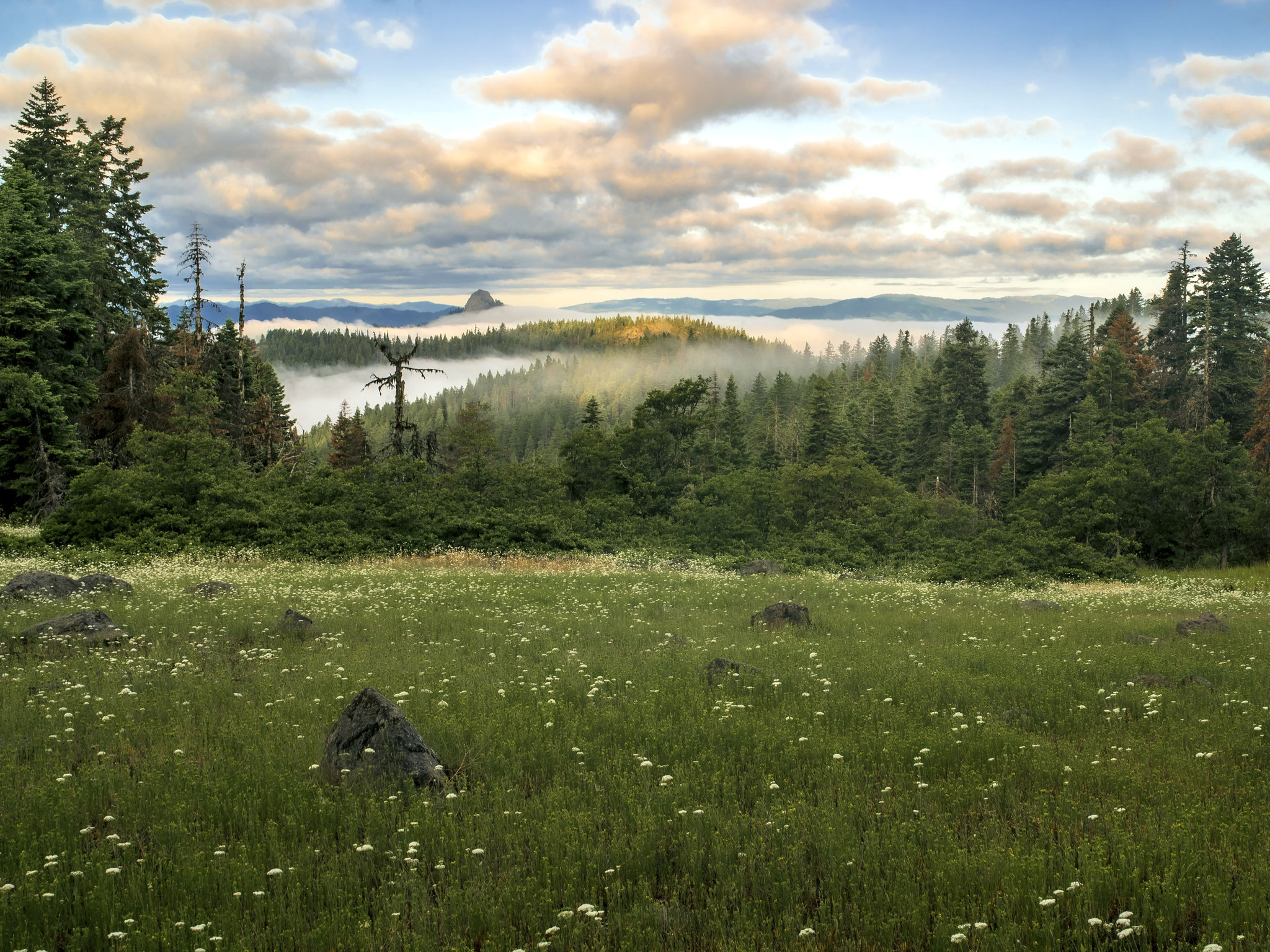 "Morning Fog, Cascade-Siskiyou National Monument, Jackson County, Oregon, 2019. Inkjet print, 34x44"", edition of 11"