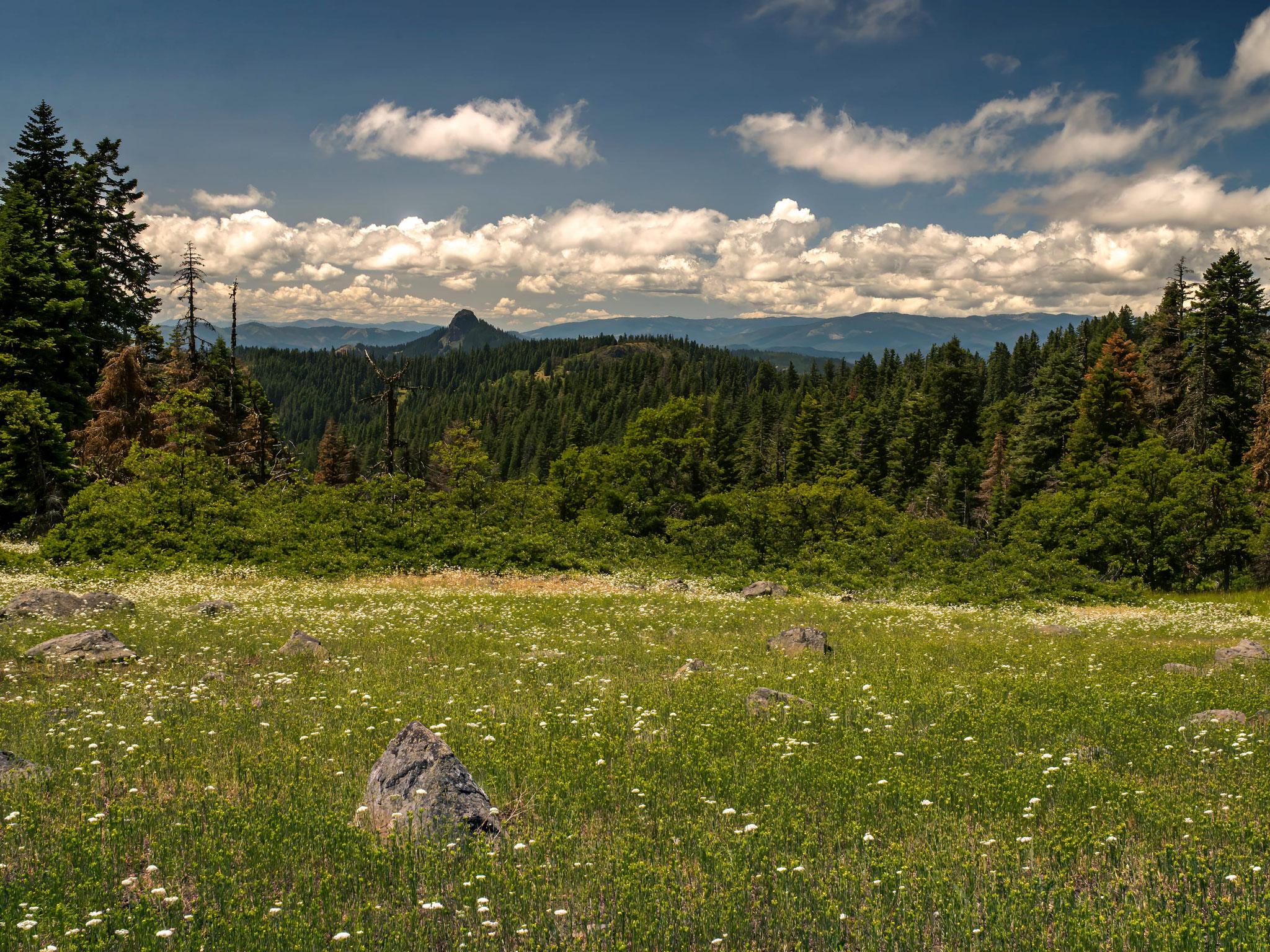 "Midday Sunshine, Cascade-Siskiyou National Monument, Jackson County, Oregon, 2019. Inkjet print, 34x44"", edition of 11"