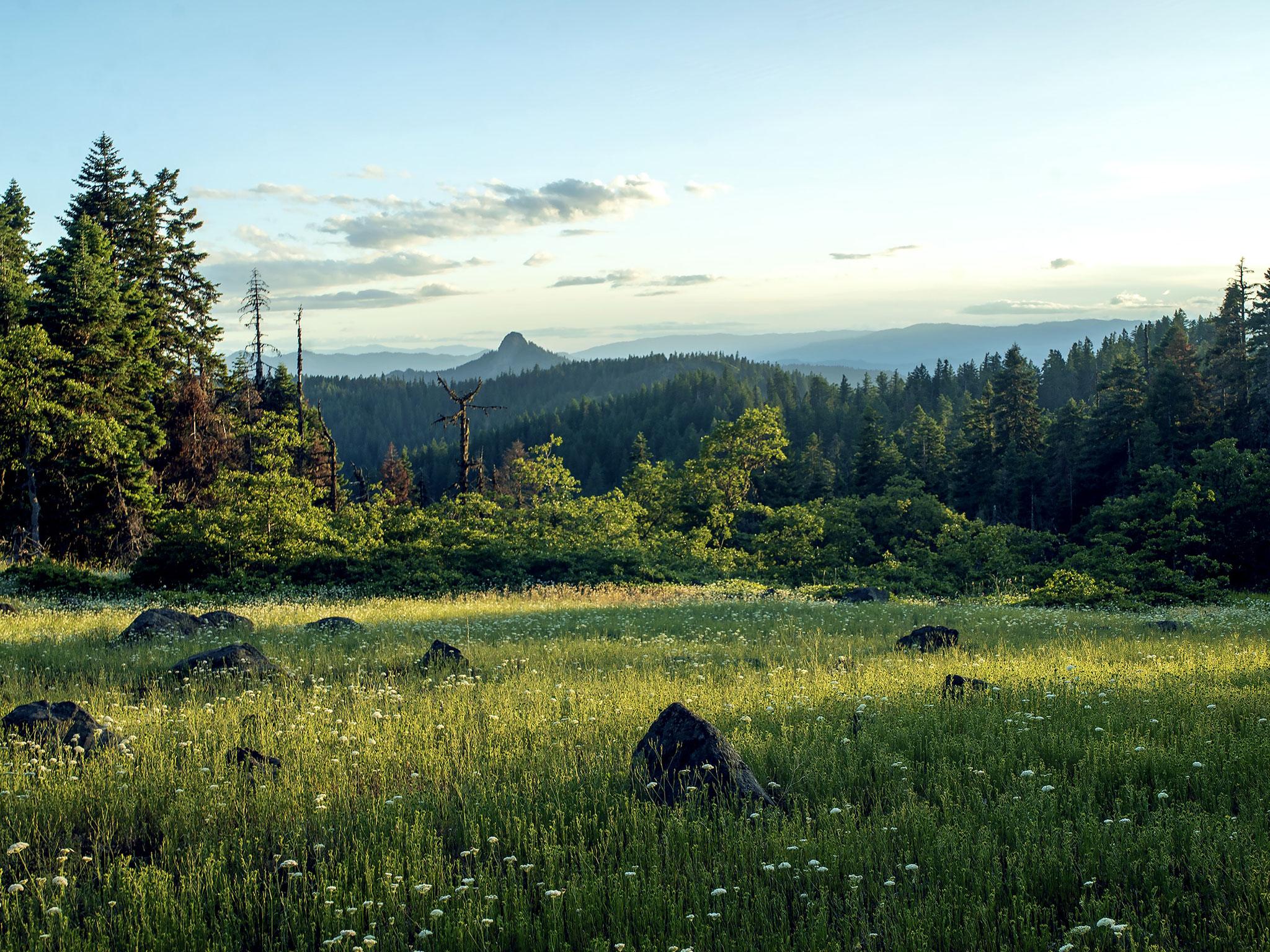 "Afternoon Shadows, Cascade-Siskiyou National Monument, Jackson County, Oregon, 2019. Inkjet print, 34 x 44"", edition of 11"