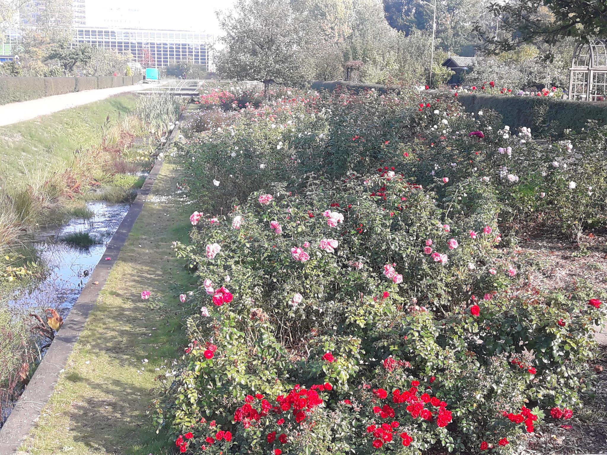 rosenboulevarrd im inselpark