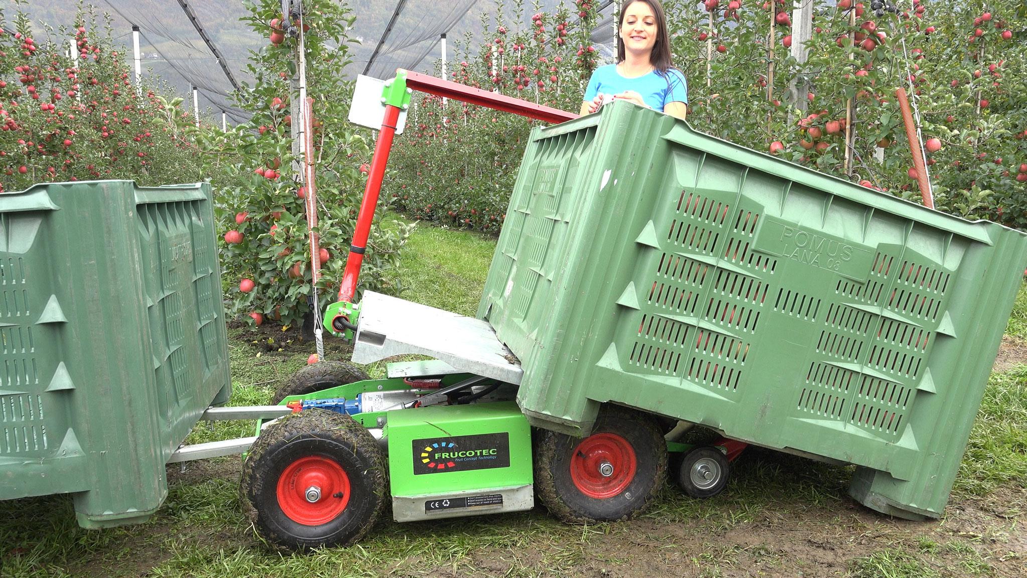 Abladen der Kiste: Frucotec Erntewagen