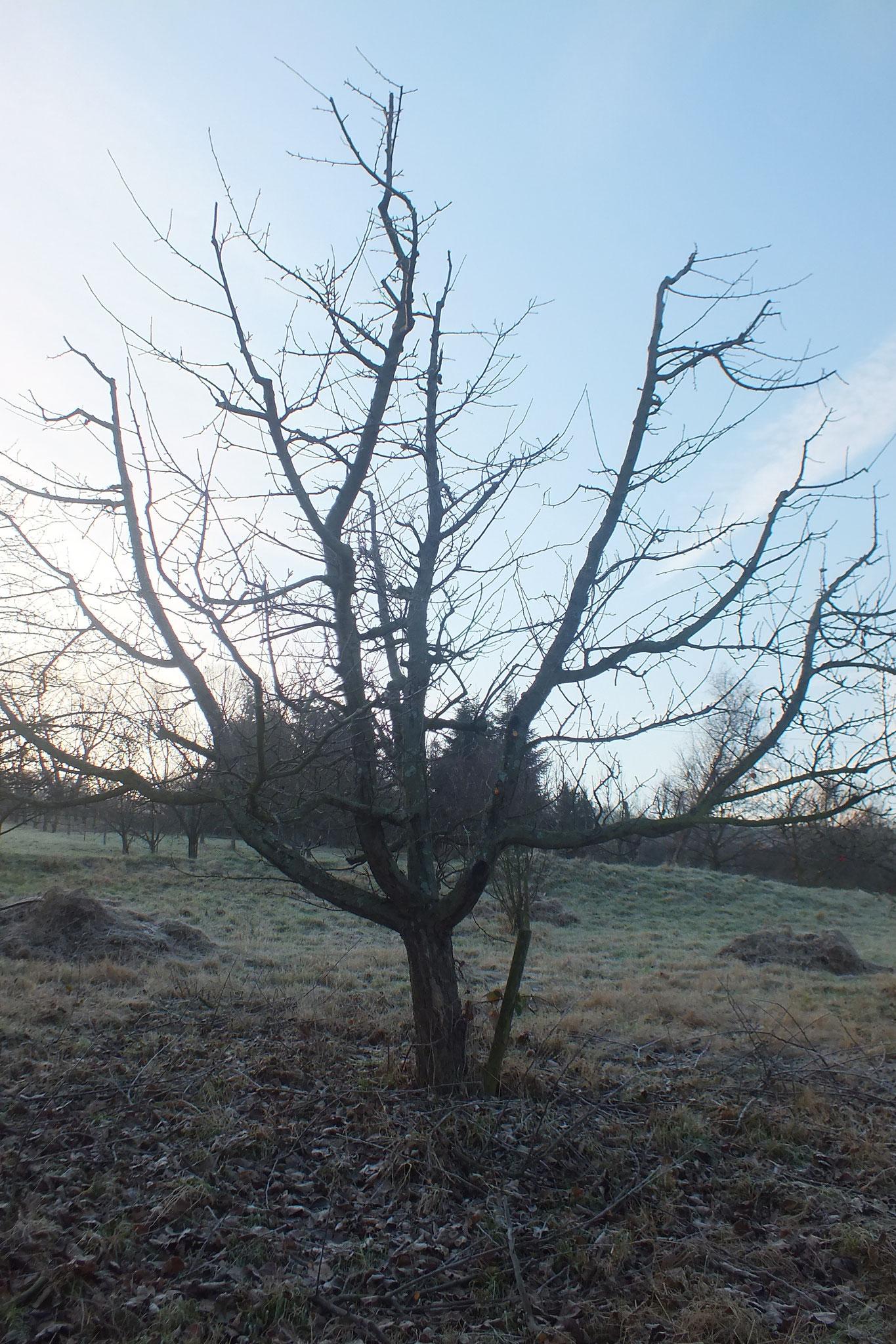 Der Musterbaum / Foto: Klaus Mödinger