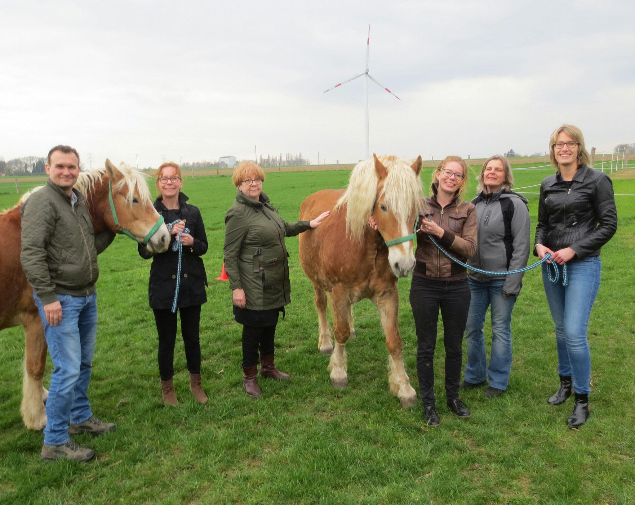 Gruppenseminar mit Pferden