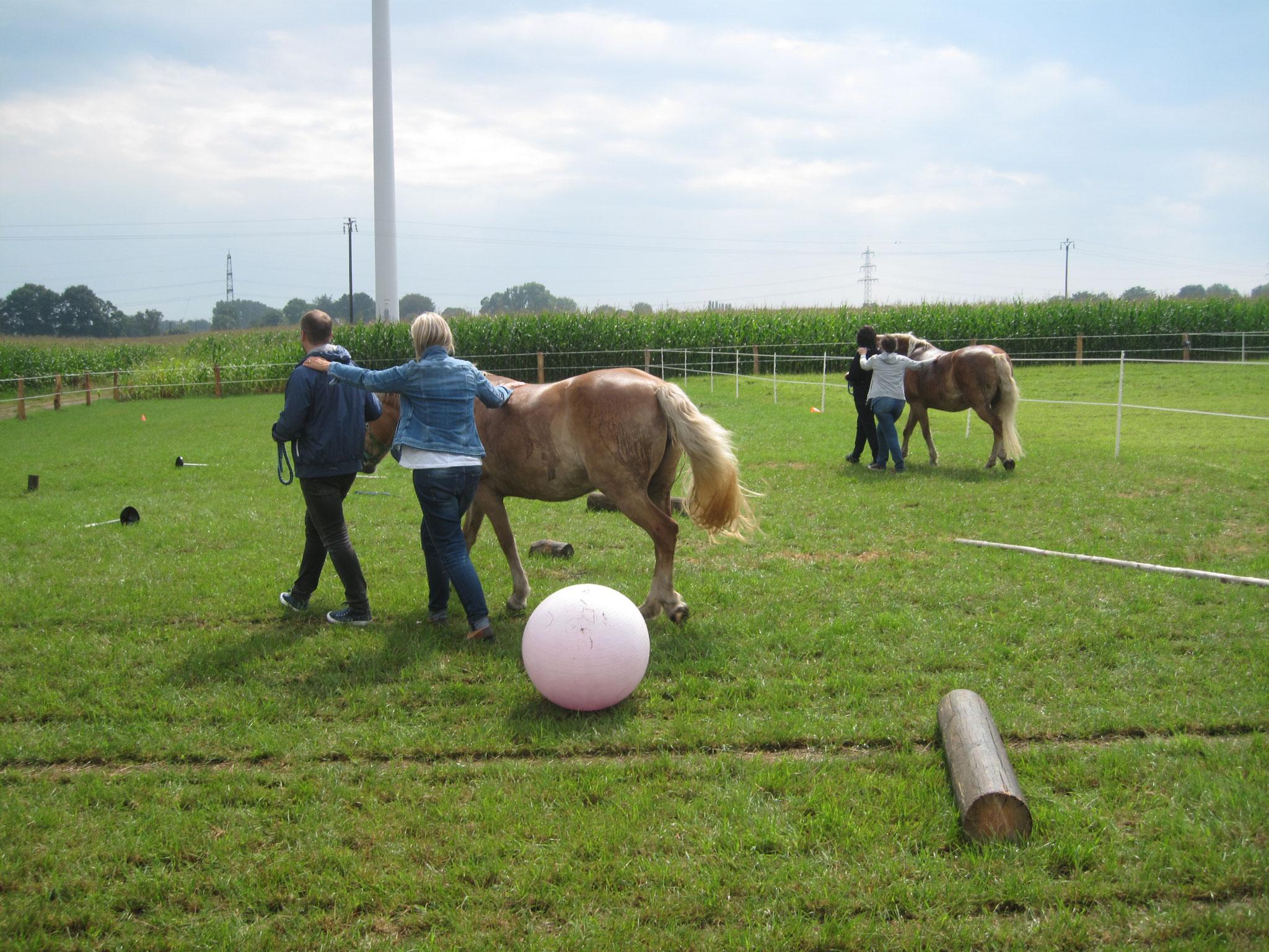 Teamtraining am Niederrhein