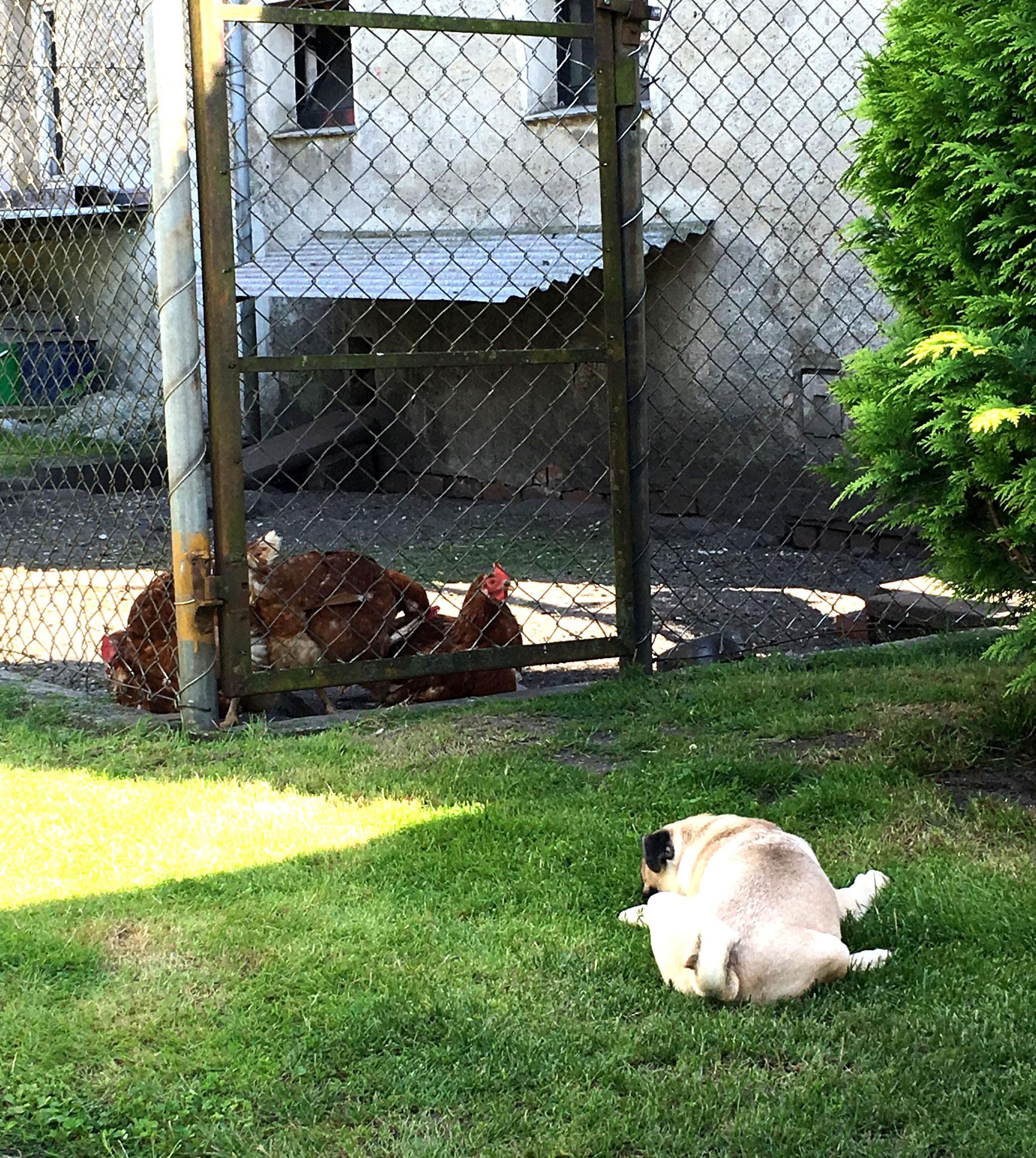 27. Juli 2016: Heute mal wieder Chicken?! :)