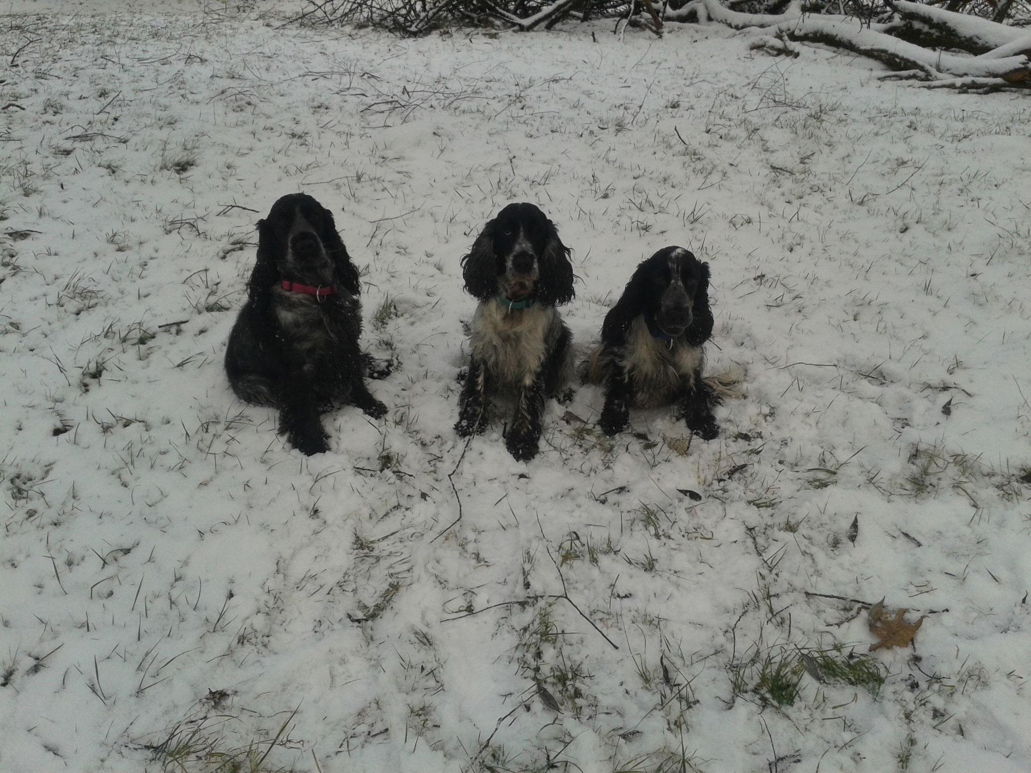 Ayla, Leika und Betty