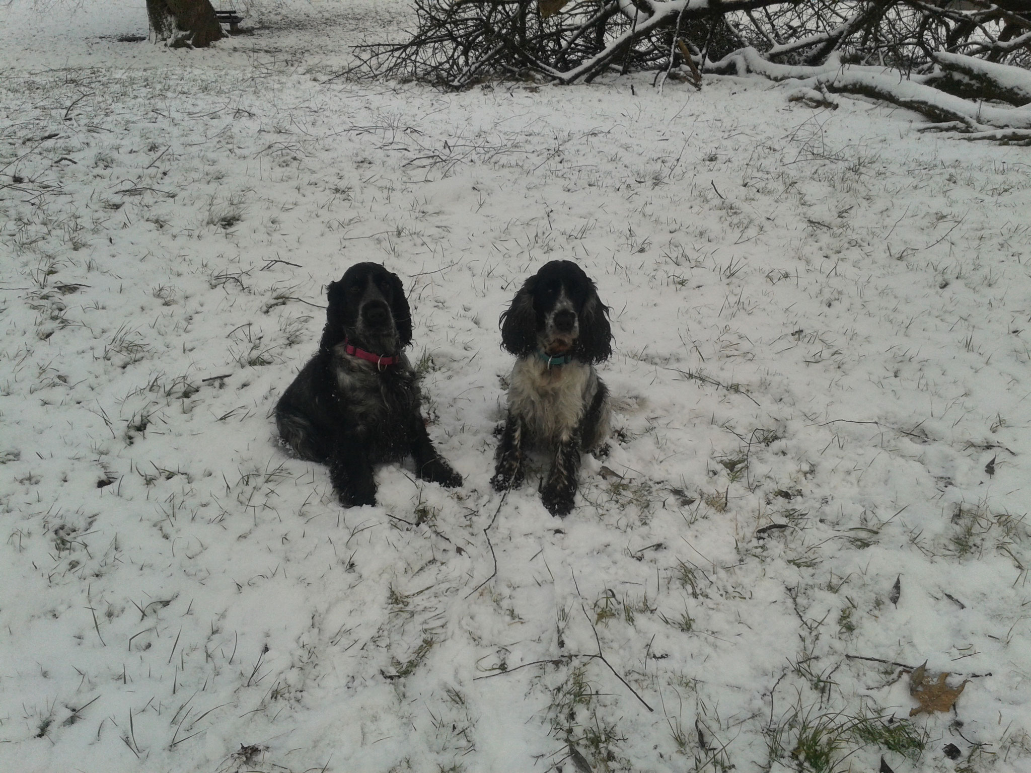 Ayla und Leika
