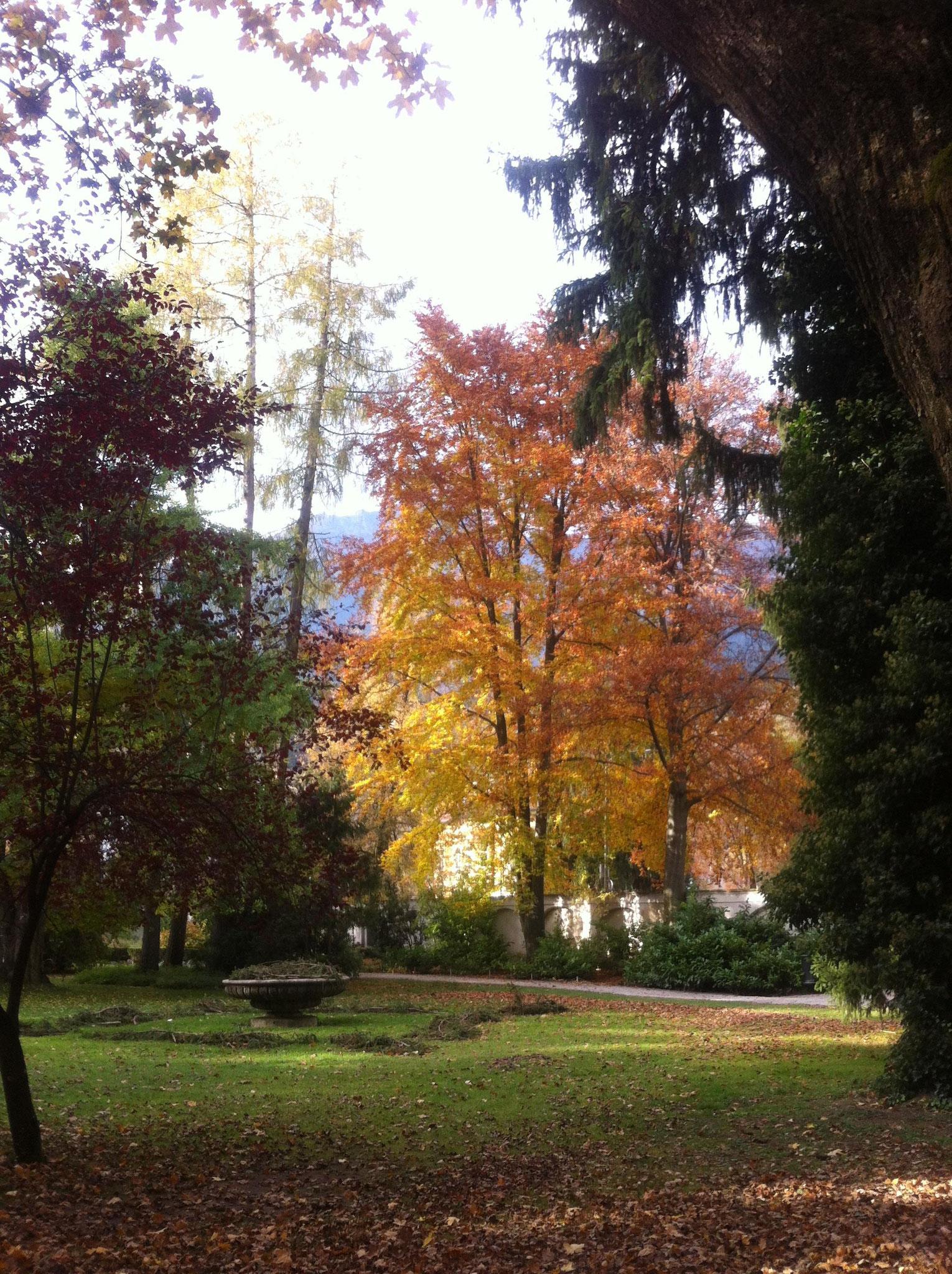 Herbst im Innsbrucker Hofgarten...  2016