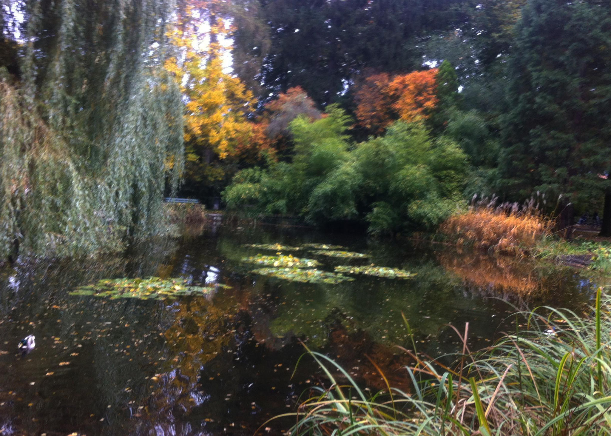 Herbstbeginn im Innsbrucker Hofgarten Anfang Okt. 2017