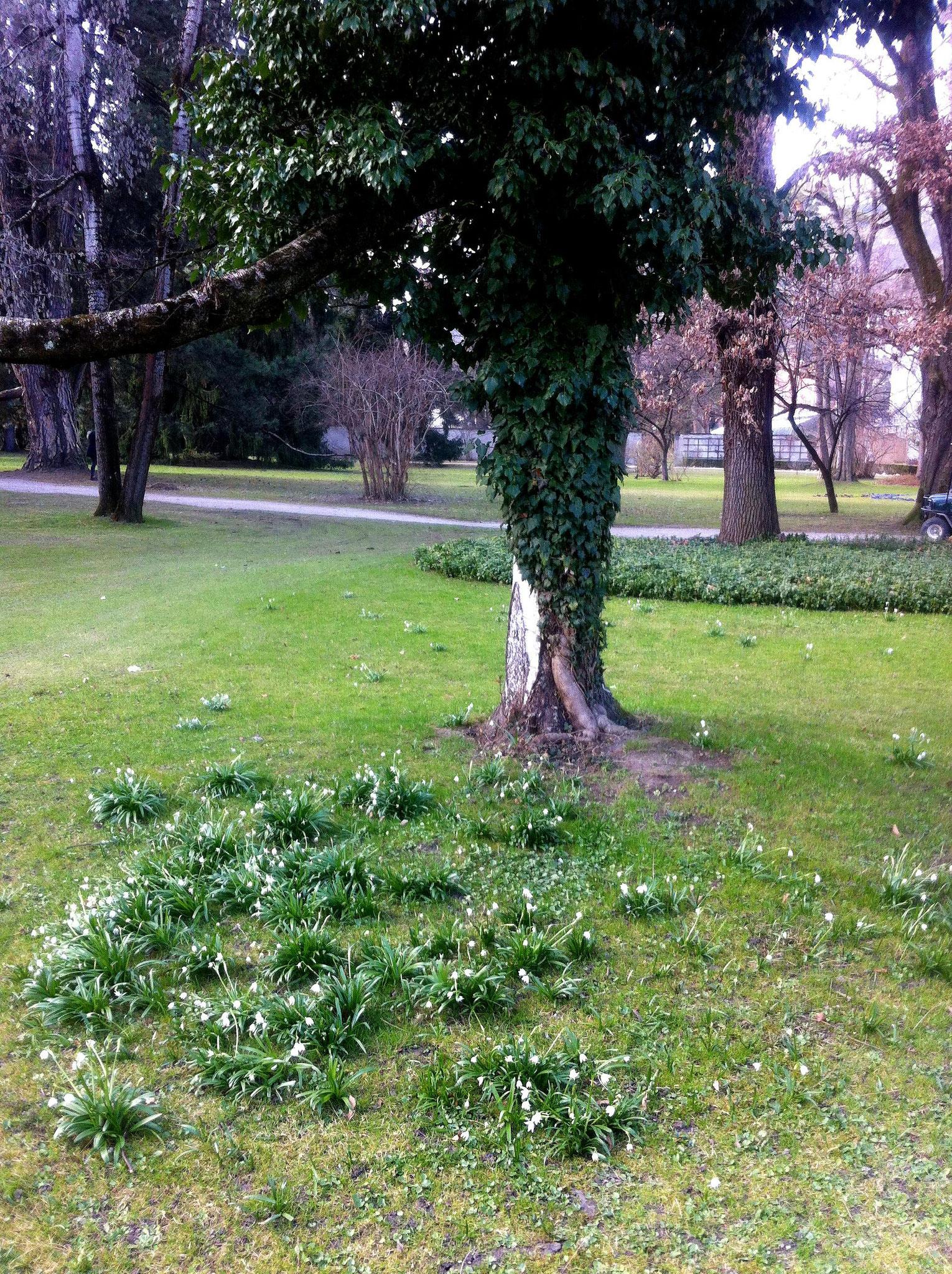 Frühling im Innsbrucker Hofgarten - 2017