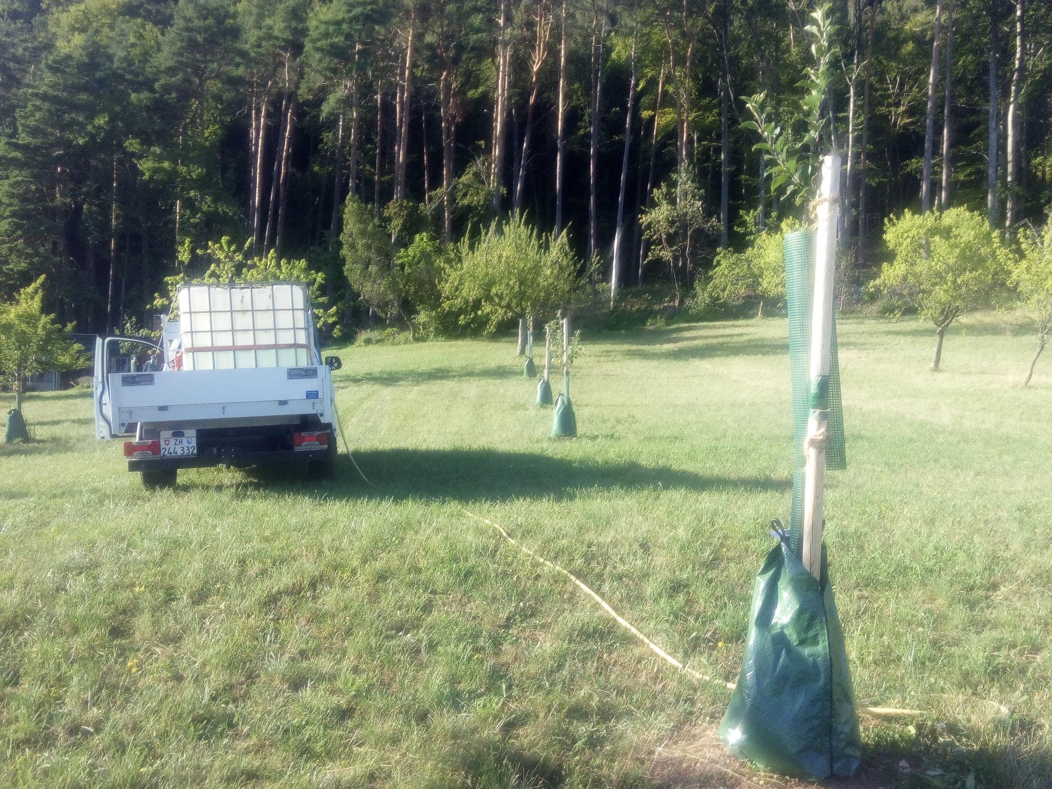 Bewässern von Neupflanzung