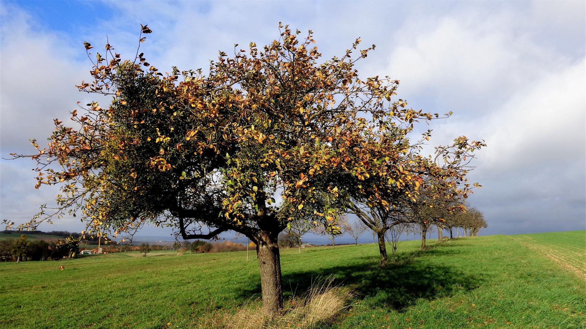 Herbstlandschaft bei Bedersdorf