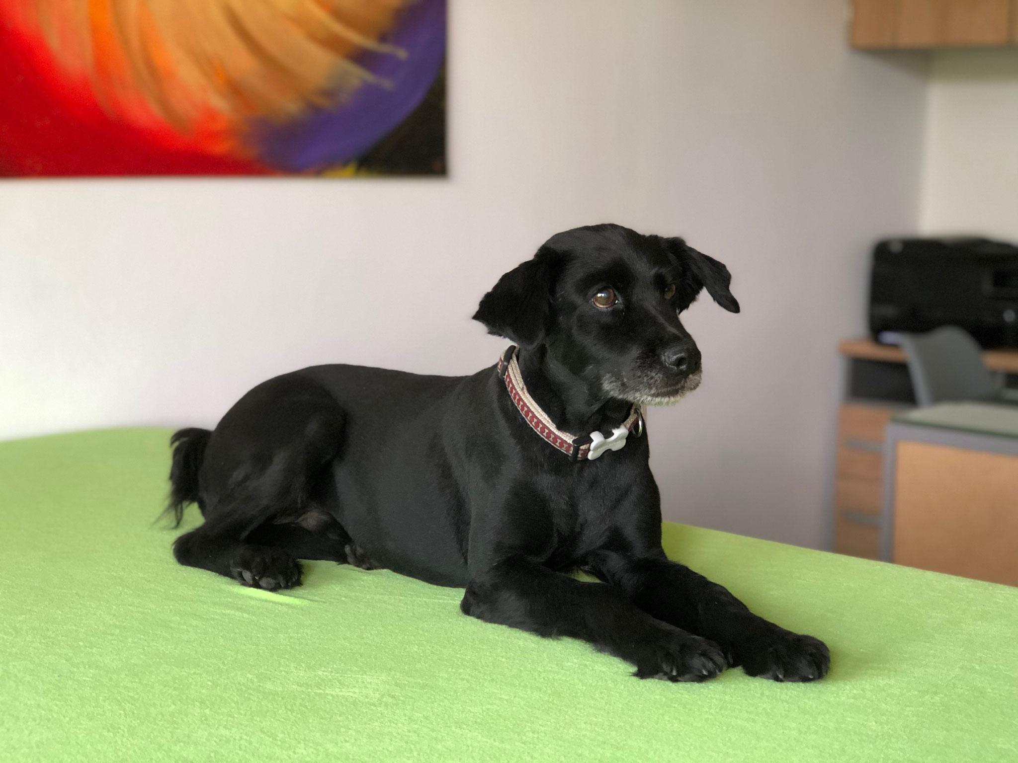 Osteopathie, Kinesiologie und Akupunktur für Hund und Katze