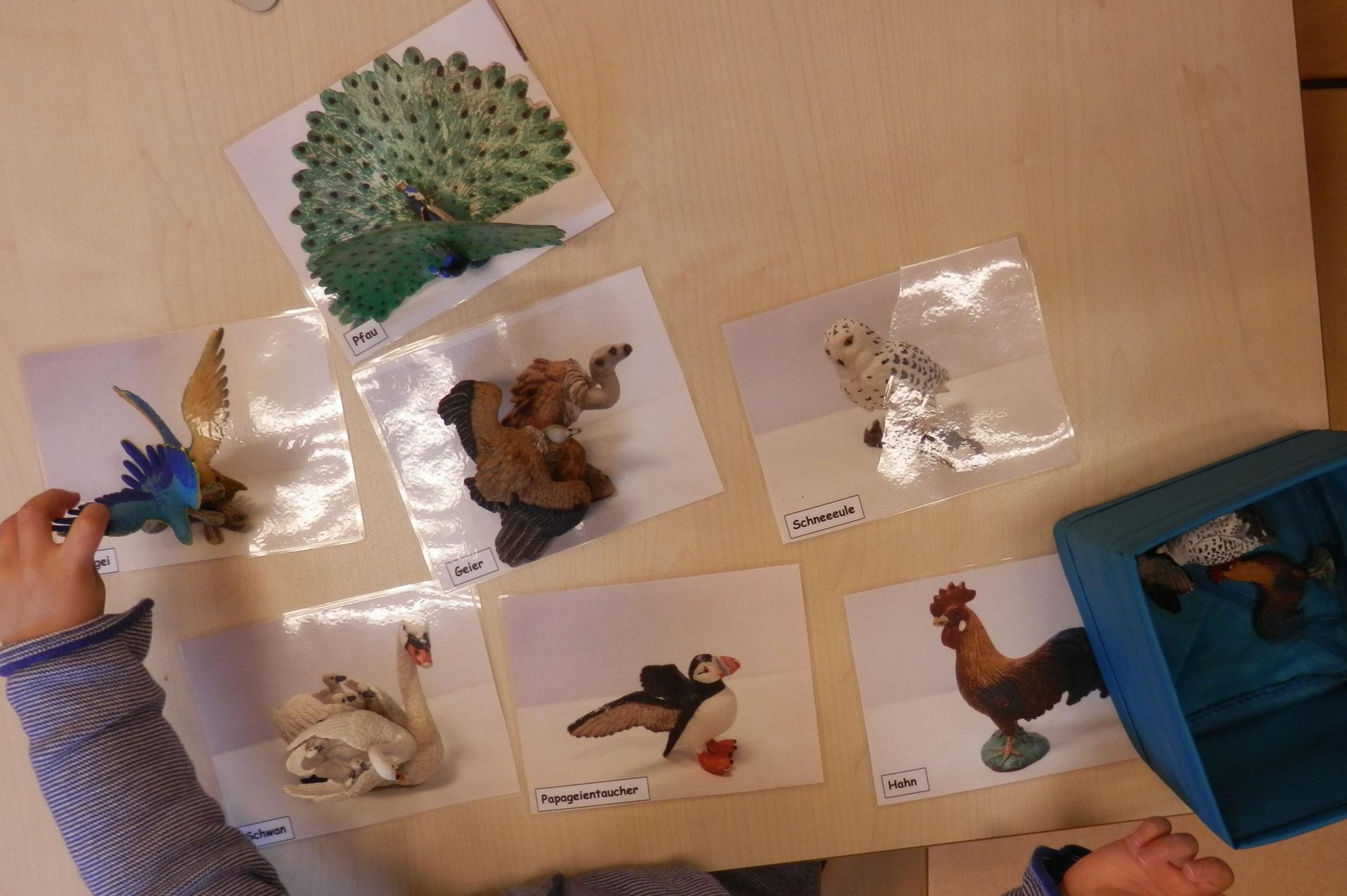 Aktionstablett - Tiere (Vögel) zuordnen