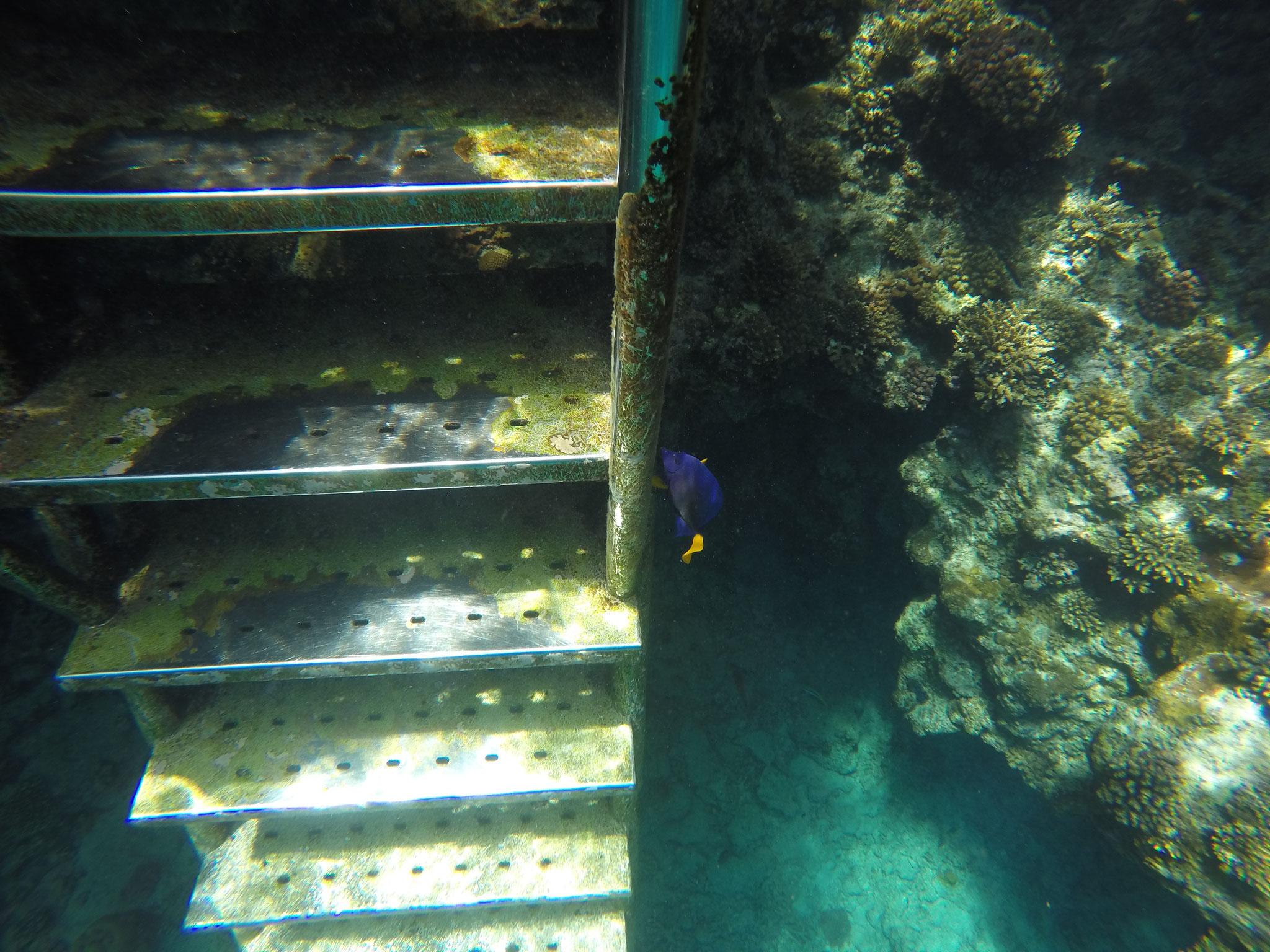 Dori, Nemo hat sich versteckt...