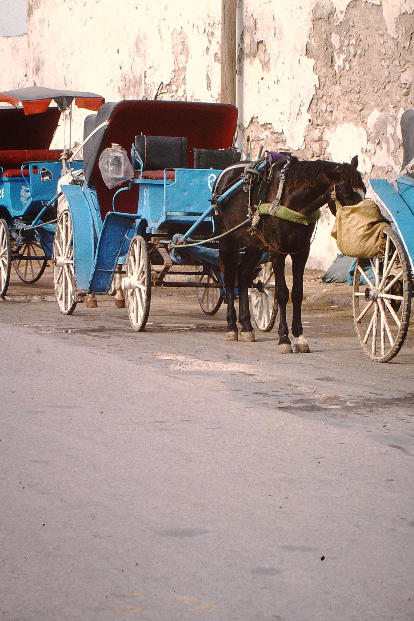 Pferdekutschen in Essauira