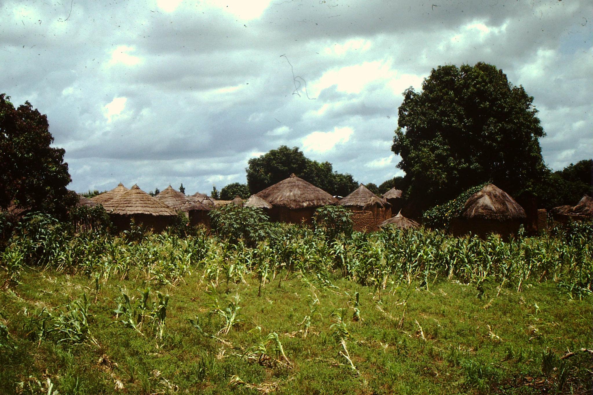 Dorf zwischen Yamoussoukro und Korhogo.