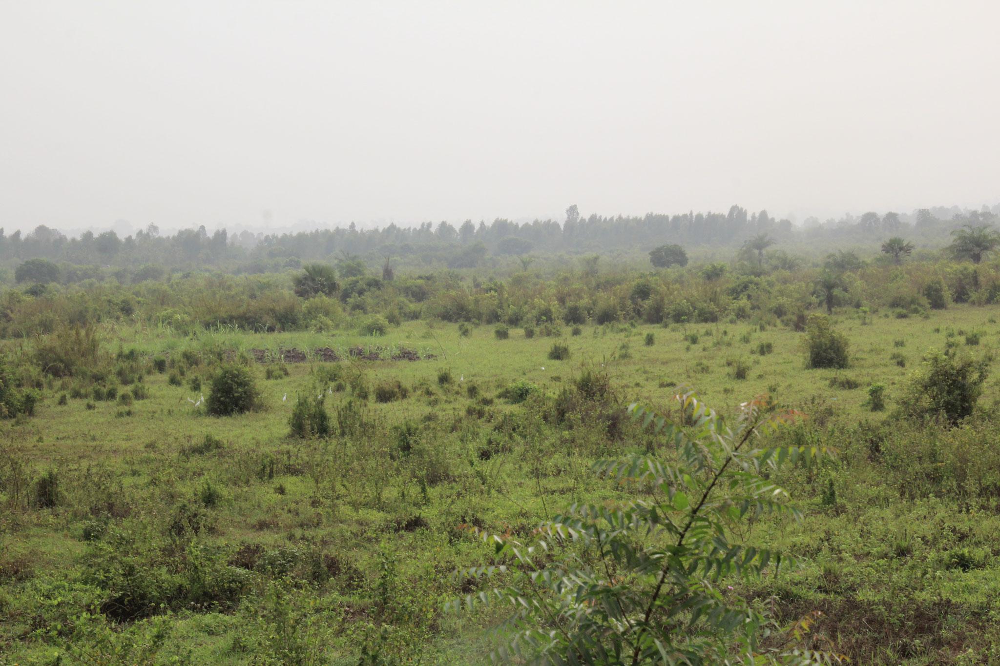Schon 30 km nördlich sieht die Landschaft ganz anders aus. Das ist in der Nähe von Togblikope.