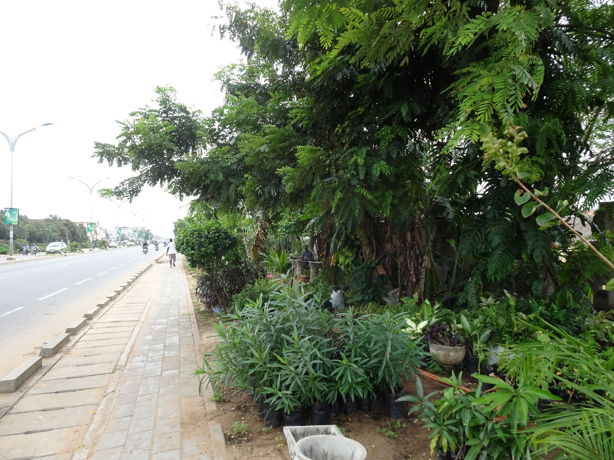 Solche illegalen Gärtnereien gibt es überall am Strassenrand