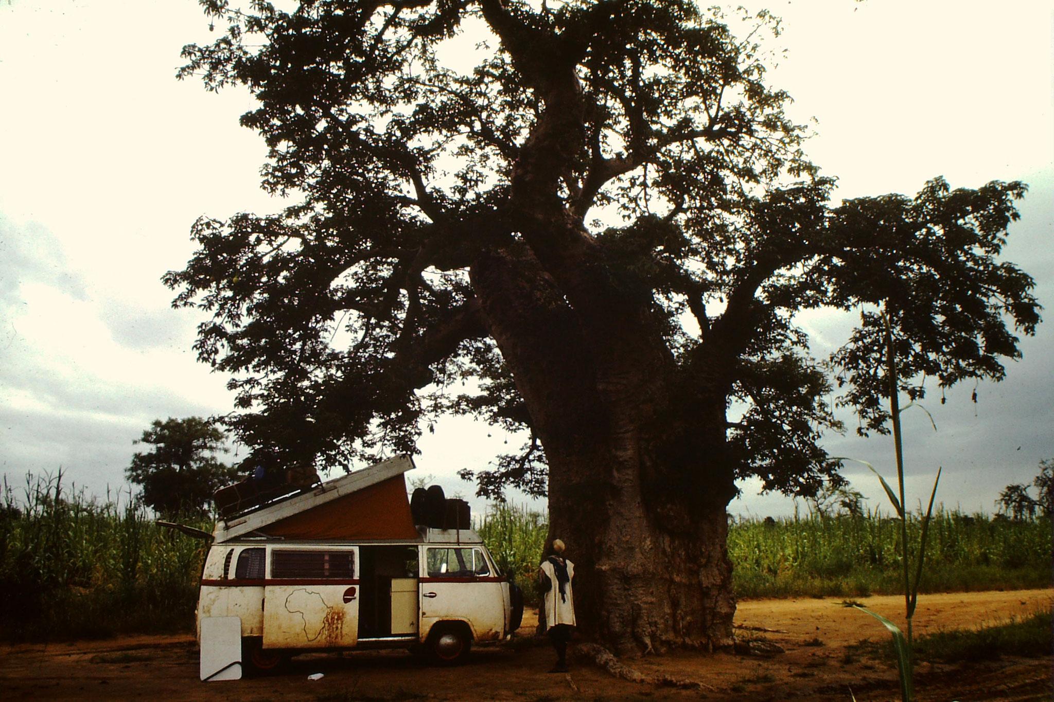 Unter diesem gewaltigen Affenbrotbaum kurz vor Koro übernachteten wir.
